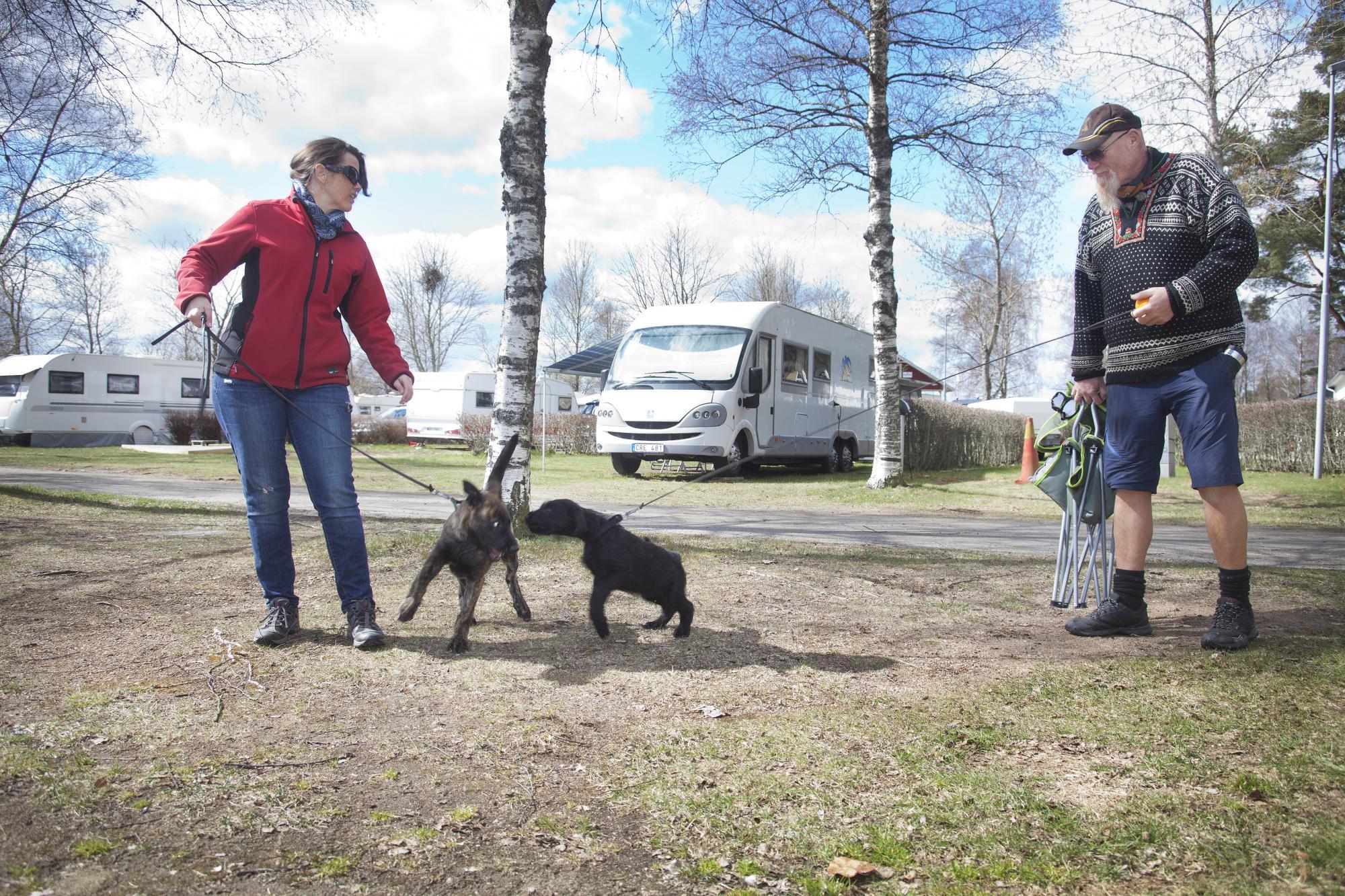 Silje Slagnes och Torgeir Rui. De har åkt från Trondheim till Tånga Hed över dagen för att hämta en valp av en svensk uppfödare.