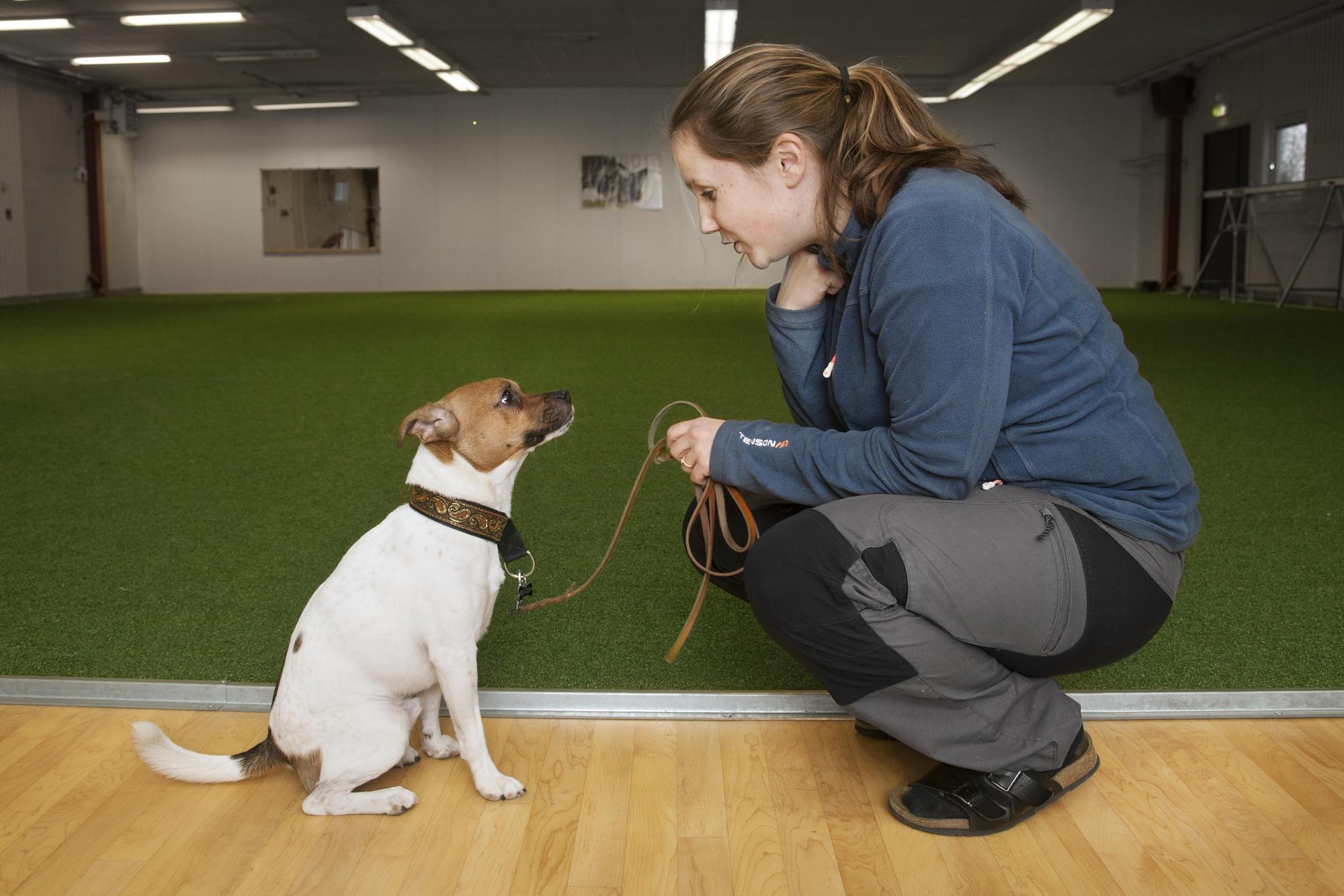Isabelles dagar består mest av hundträning men hon gillar även att odla, heminredning och att göra fint.