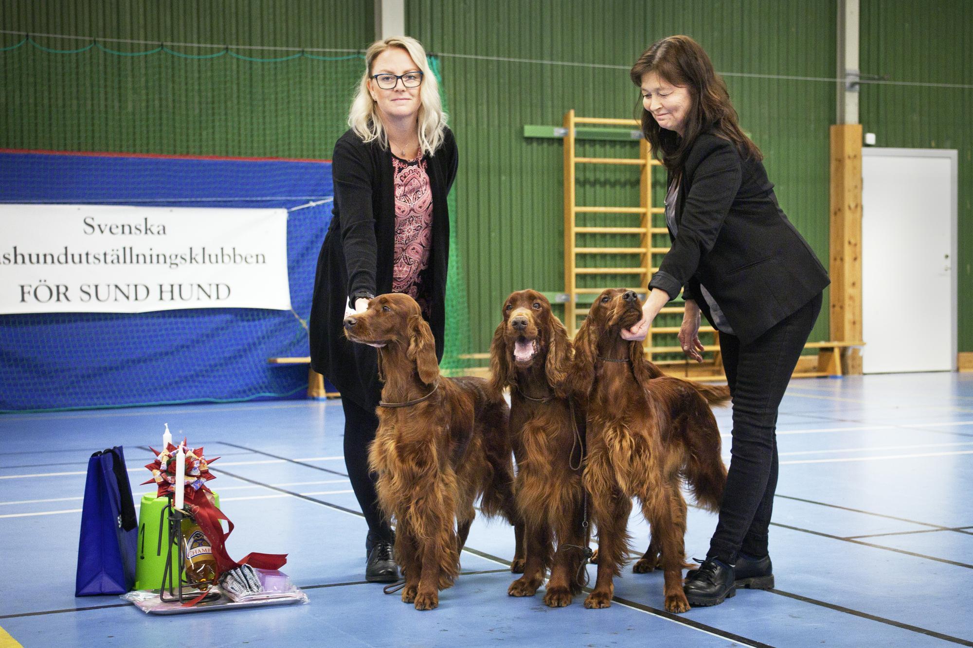 Eva Olsson från Mockfjärd tog hem vinsten i uppfödarklassen med hundarna Laiza's For Love O Irish, Laiza's Elliot (BIS 3a) och Laiza's Hallo I'm Irish. Maria Eriksson hjälpte sin uppfödare att visa hundarna.
