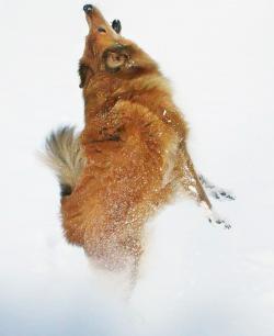 Casper var Ingela Marcussons första hund & hon skulle vilja ha honom klonad.