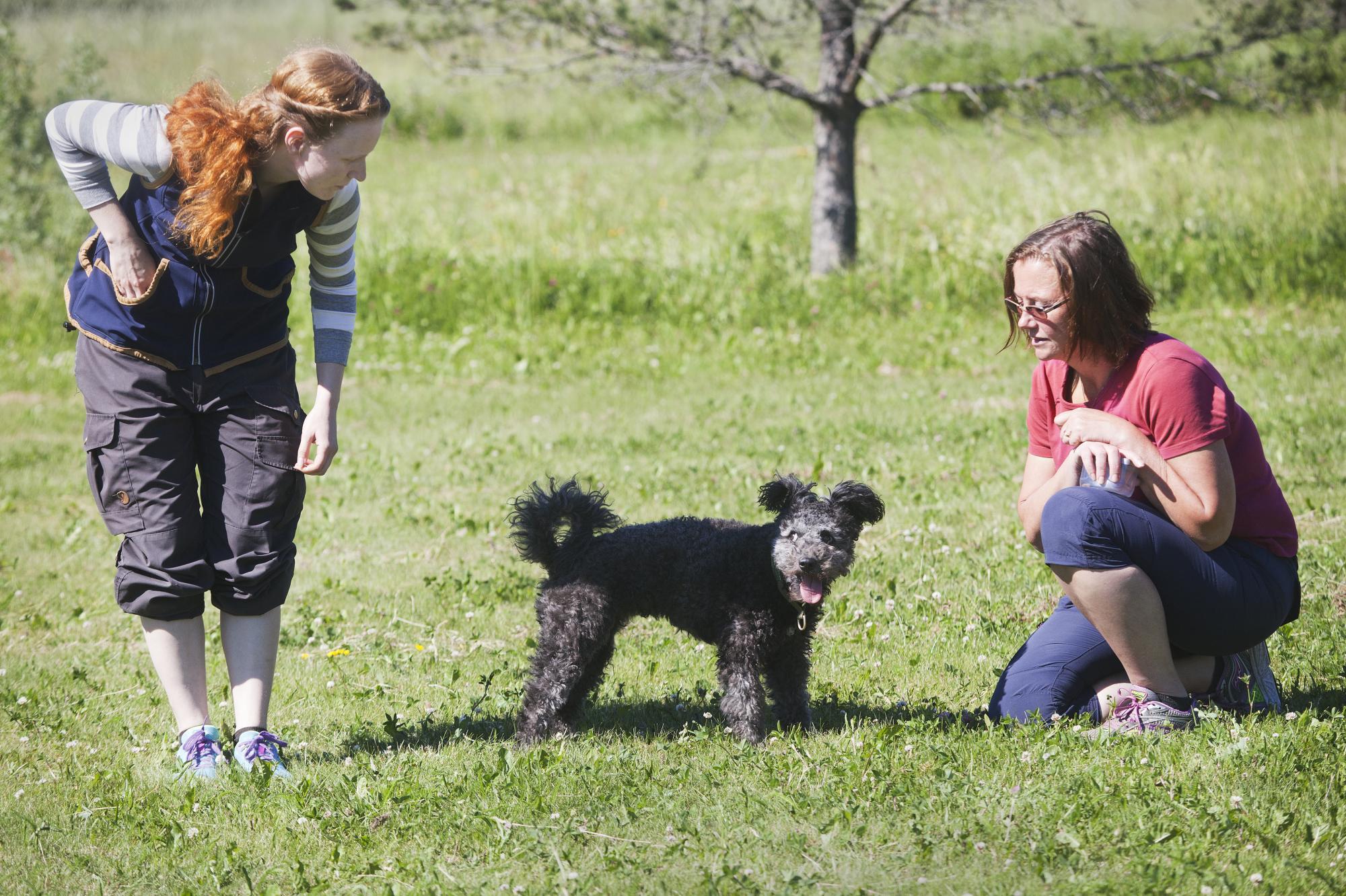 Med extern belöning hjälper Lotta Lovisa att träna Alice i fritt följ.