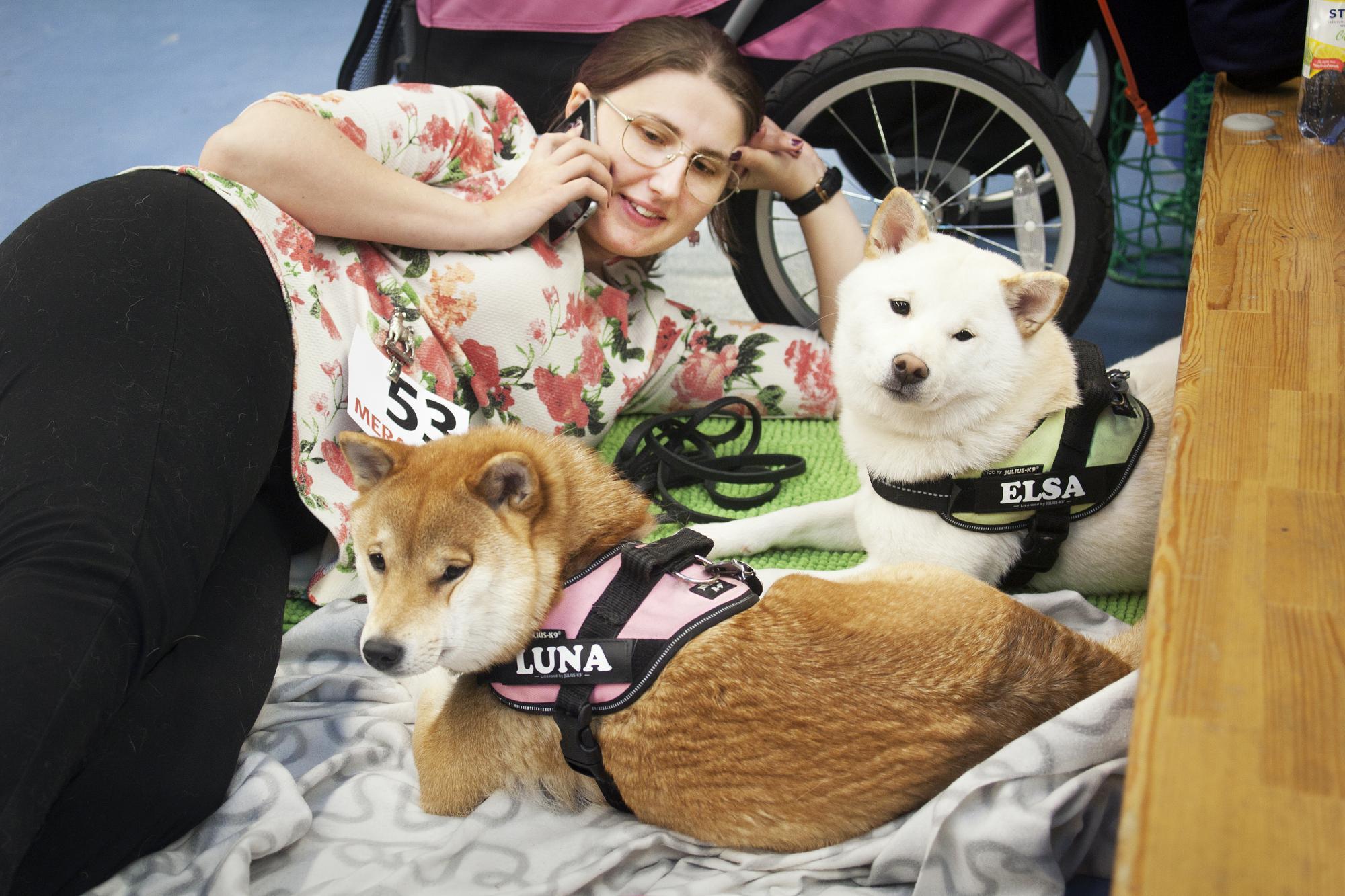 Evelina Hjelm tar det lungt med sina hundar i väntan på unghundsfinalen. Luna, Kringelmyras Luna Lovegood och Elsa som är av rasen Shiba.