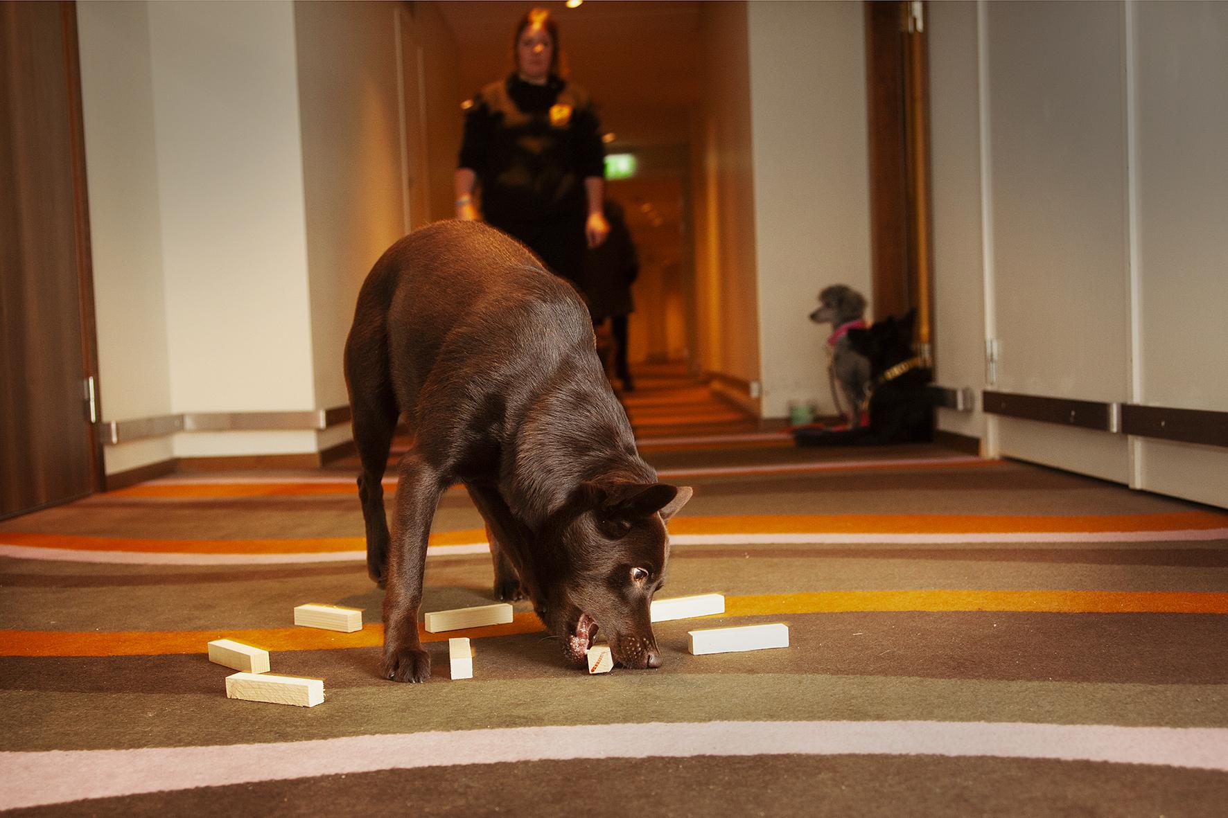 I en av korriorerna på våning 11 tränar Kelpien Marwin, \