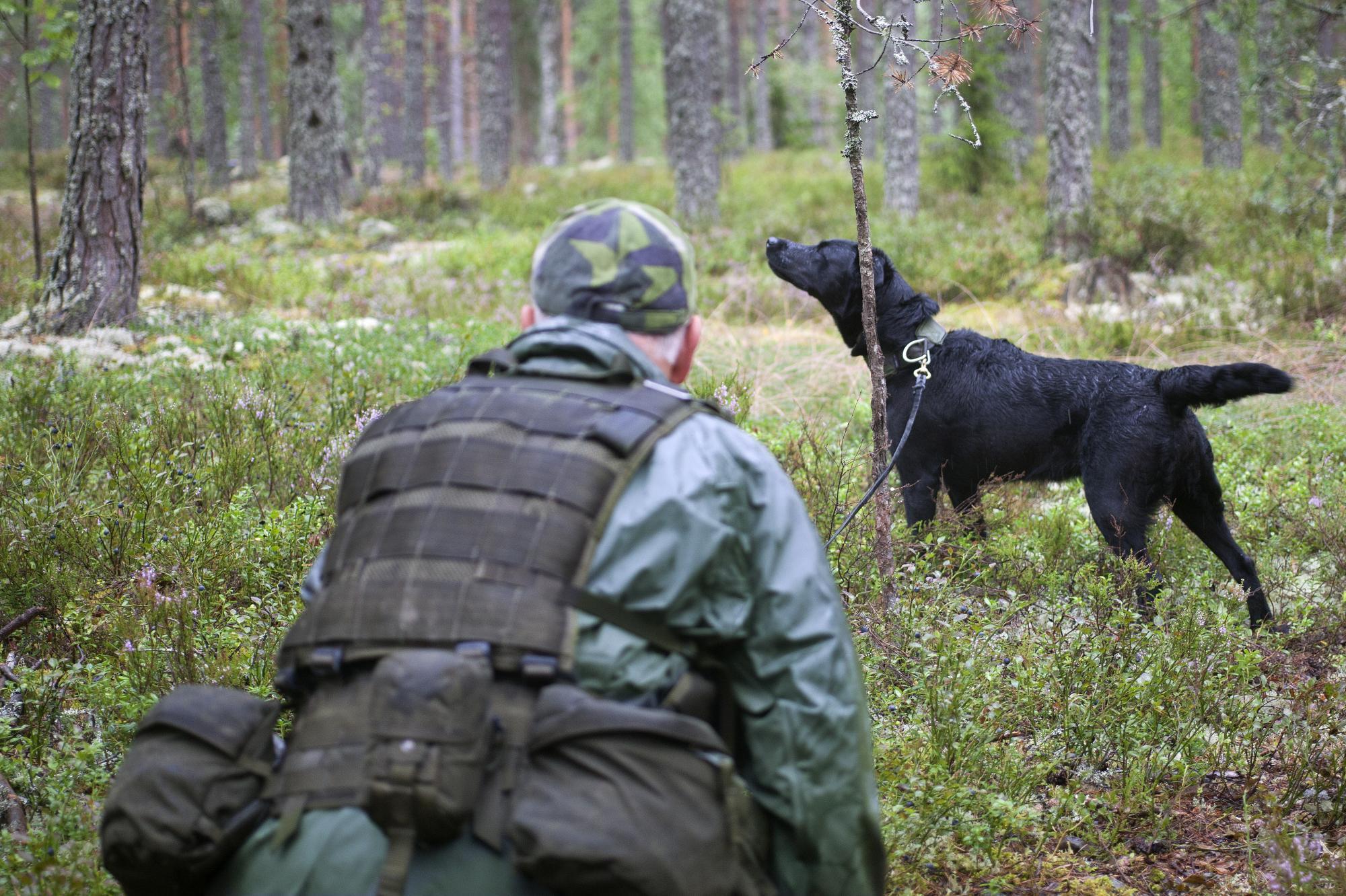 Mats Andersson och Tess blev historiska då de vann SM för patrullhund för tredje året i rad. Klicka på bilden för att komma till reportaget från SM för försvarsmaktshundar och poddintervju med Mats.