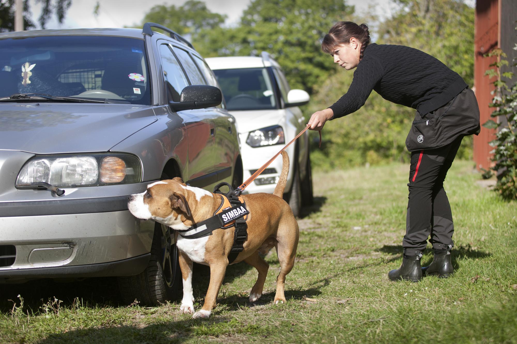 Efter att Nose Work blev en officiell sport har antalet utövare ökat.Person och hund på bilden är utövare av Nose Work, men har inget med själva artikeln att göra.