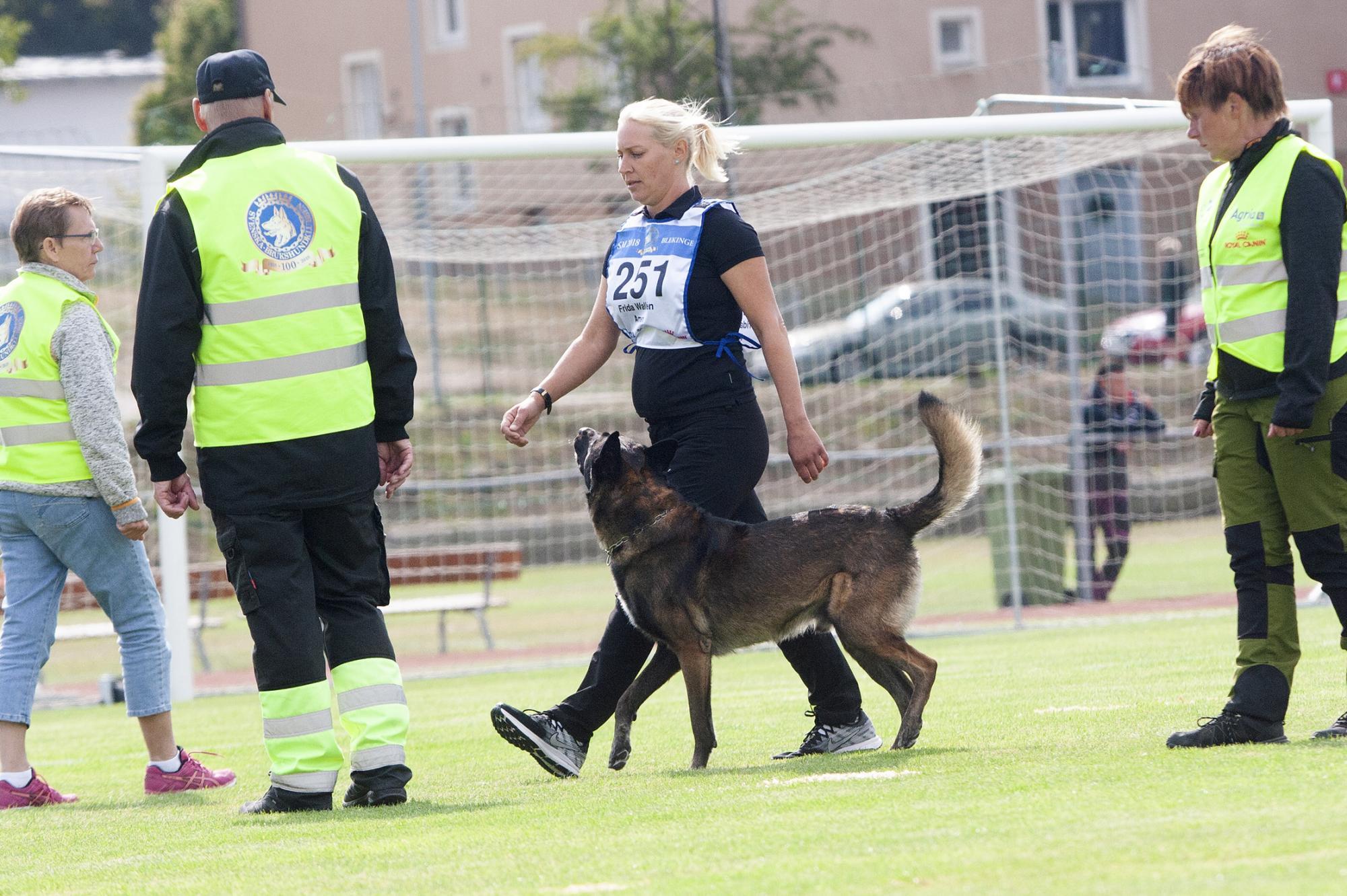 Frida Wallén & Bruksviljans Amen var överlägsna vinnare av SM för IPO-hundarna. Nu är Bruksviljans Amen utsedd till årets IOP-hund.