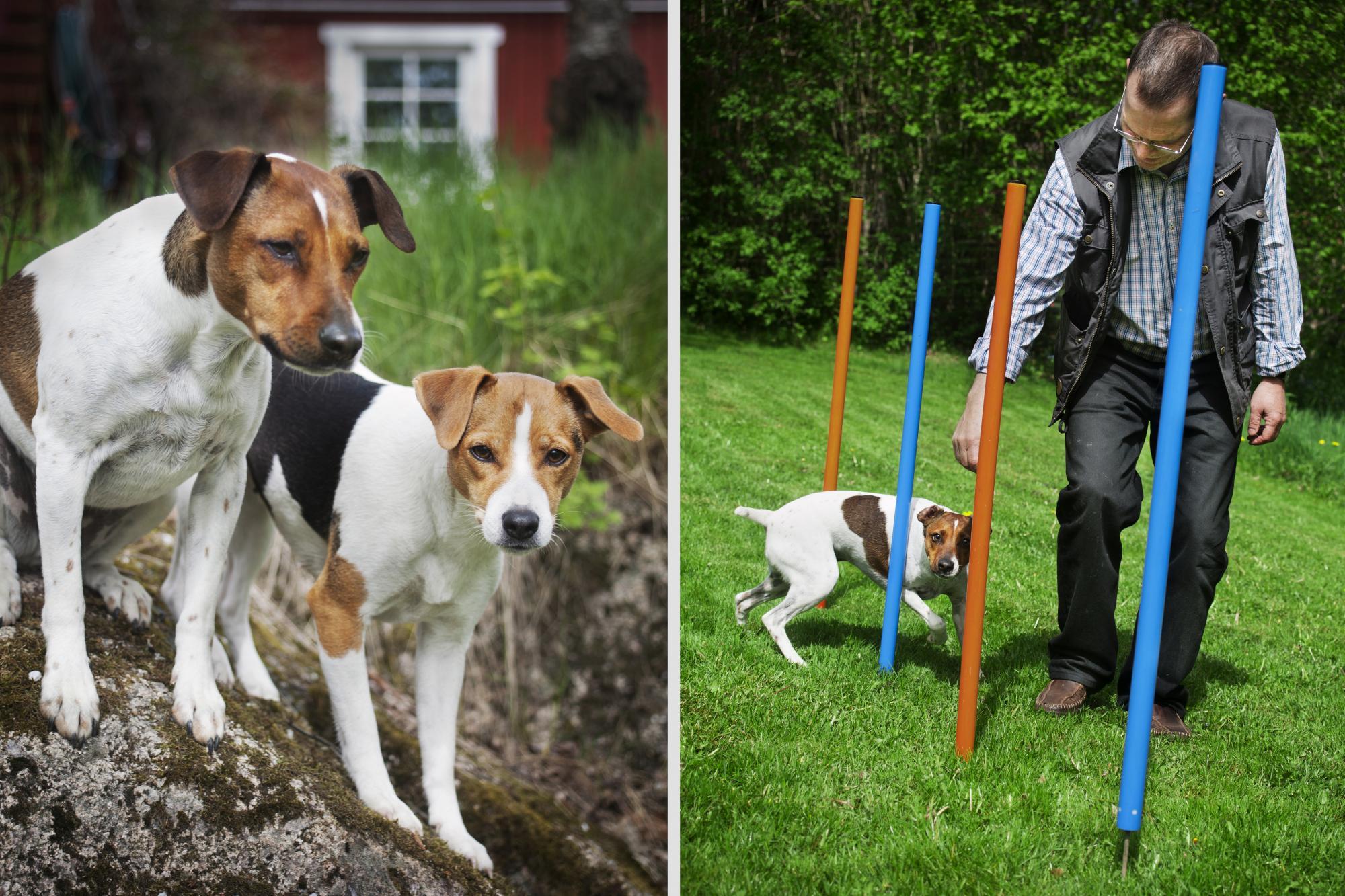 Idag har vi ett stort utbud med roliga saker att göra tillsammans med sin hund, tycker Per Jensen.
