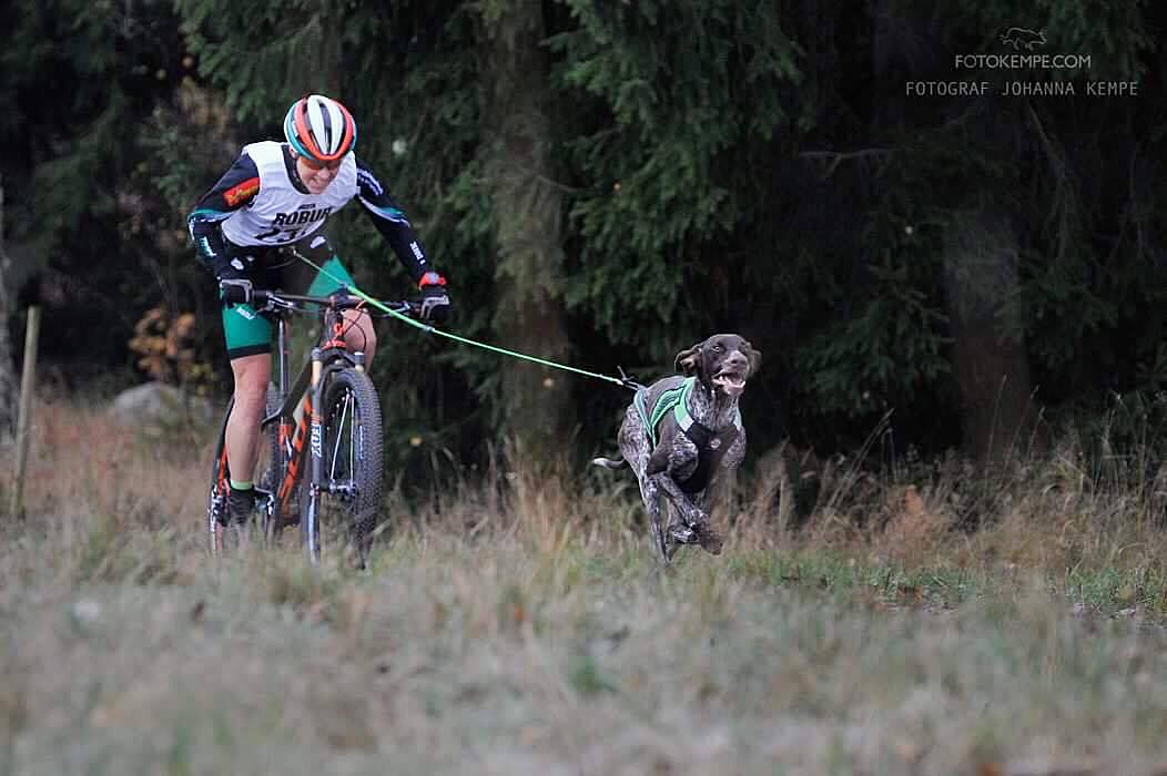 <span>Hanna Bergman, Falu DHK, och hunden Tintin körde 6,5 km på 12:50 första dagen och 13:08 andra dagen. De vann båda loppen och stod slutligen som segrare i cykelklassen för damer med A-hund.</span>