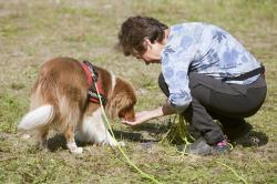 Carina Berglund är ordförande i Miniature American Shepherdklubben ochmatte till Cola, \