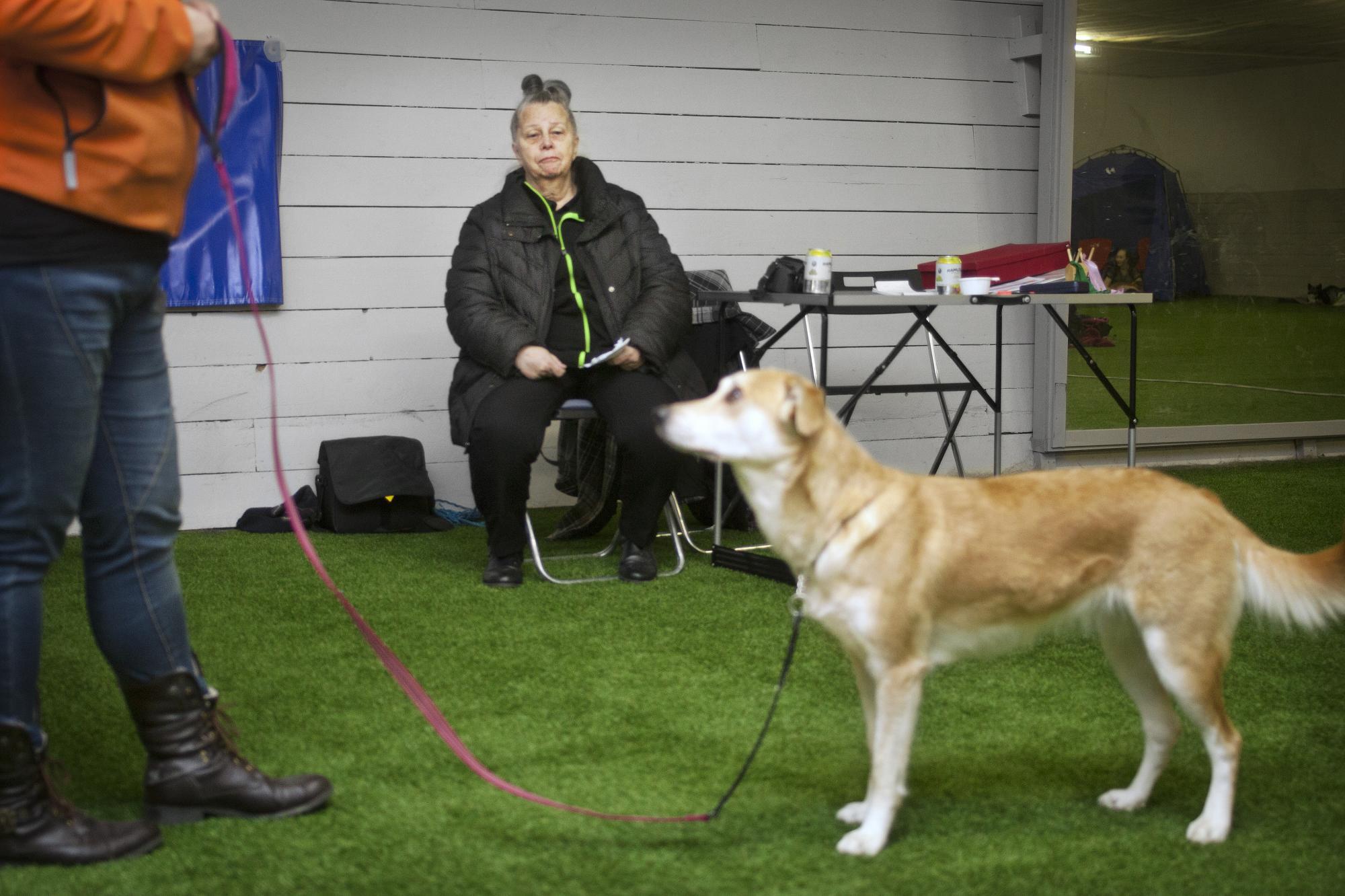 Vivian Loftén Nilson startadeblandrasföreningen den 1 juli 1993. Hon fick idén efter att hennes dotter kom hem från brukshundklubben och kände sig besviken över sin blandrashund.