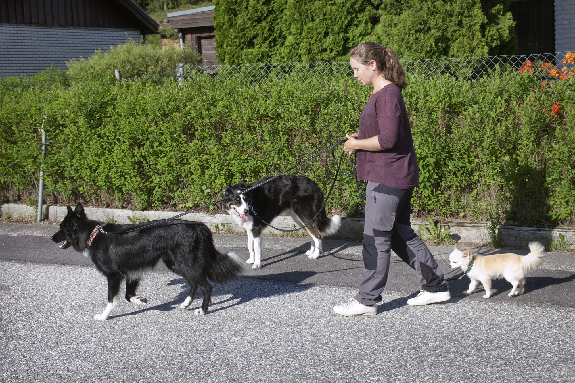 Isabelles hundar känner sig trängda då de tvingas till kopplade hundmöten. I skinnskatteberg behöver de inte utsättas för detta lika ofta och hundarna mår därmed mycket bättre.