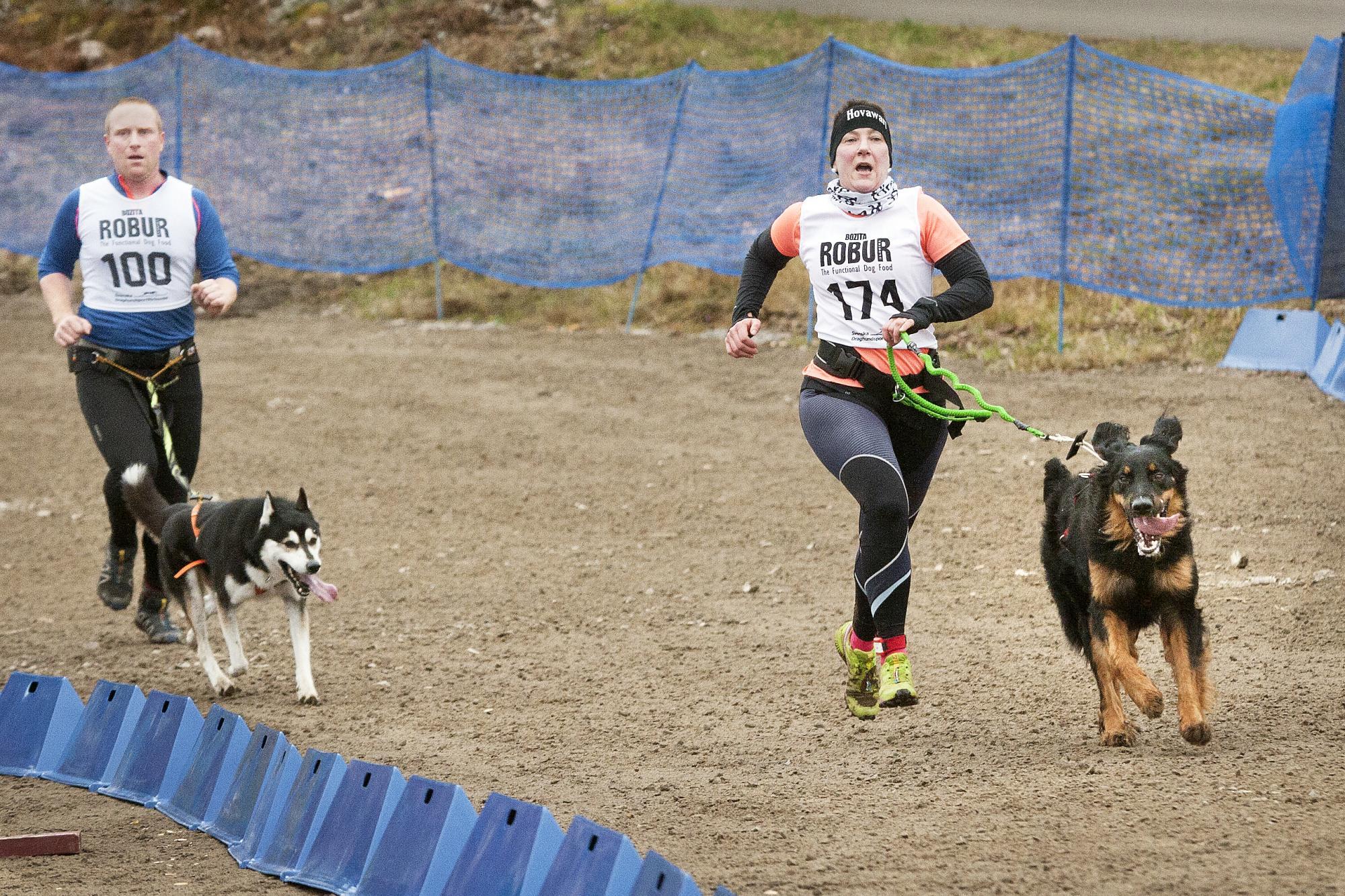 <span>Gunilla Pöchacker och Petter Hillborg går i mål i klassen linlöpning. Gunilla tävlade även scooter med en hund och gick segrande i mål bland de yngre veteranerna.</span>
