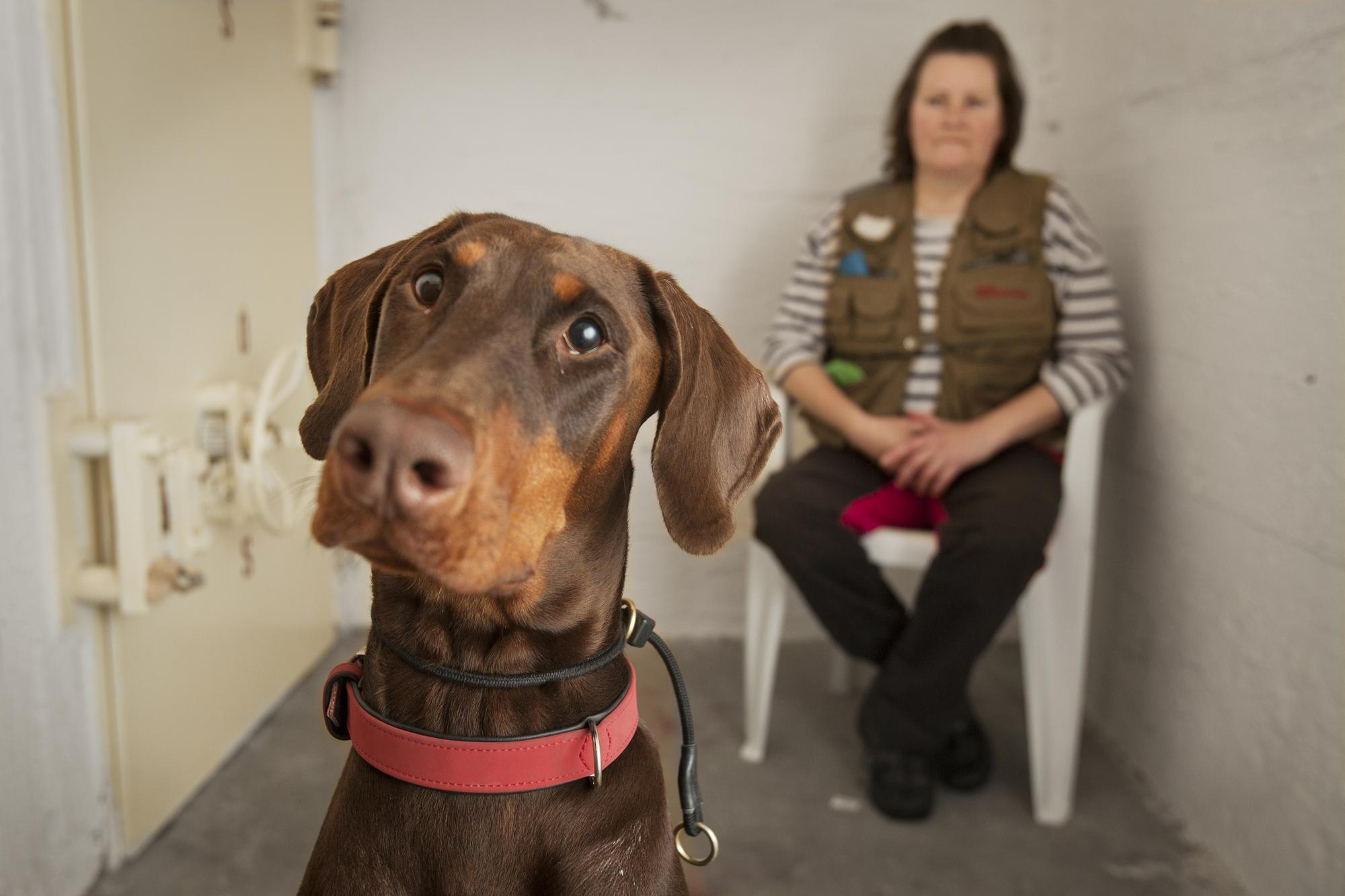 Anette Bergenström firade nyår i sitt skyddsrum för att inte utsätta sin hund Lova för skott och fyrverkerier. <br />Klicka på bilden för att komma till Webb-TV-inslaget.