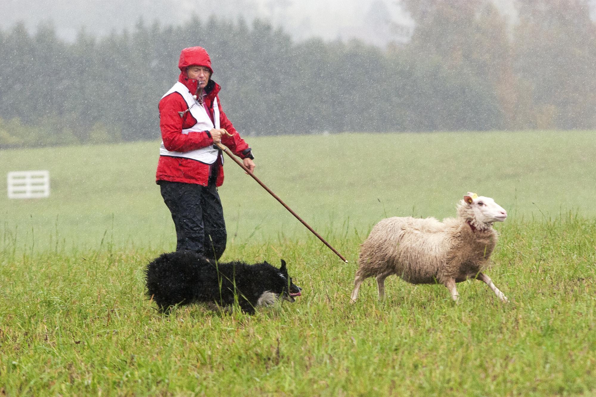 Marianne Klima vann kvaltävlingen med sin hund<span>Timetolearn Bits och tävlar även i finalen med sin andra hundTimetolearn Tjeck.</span>