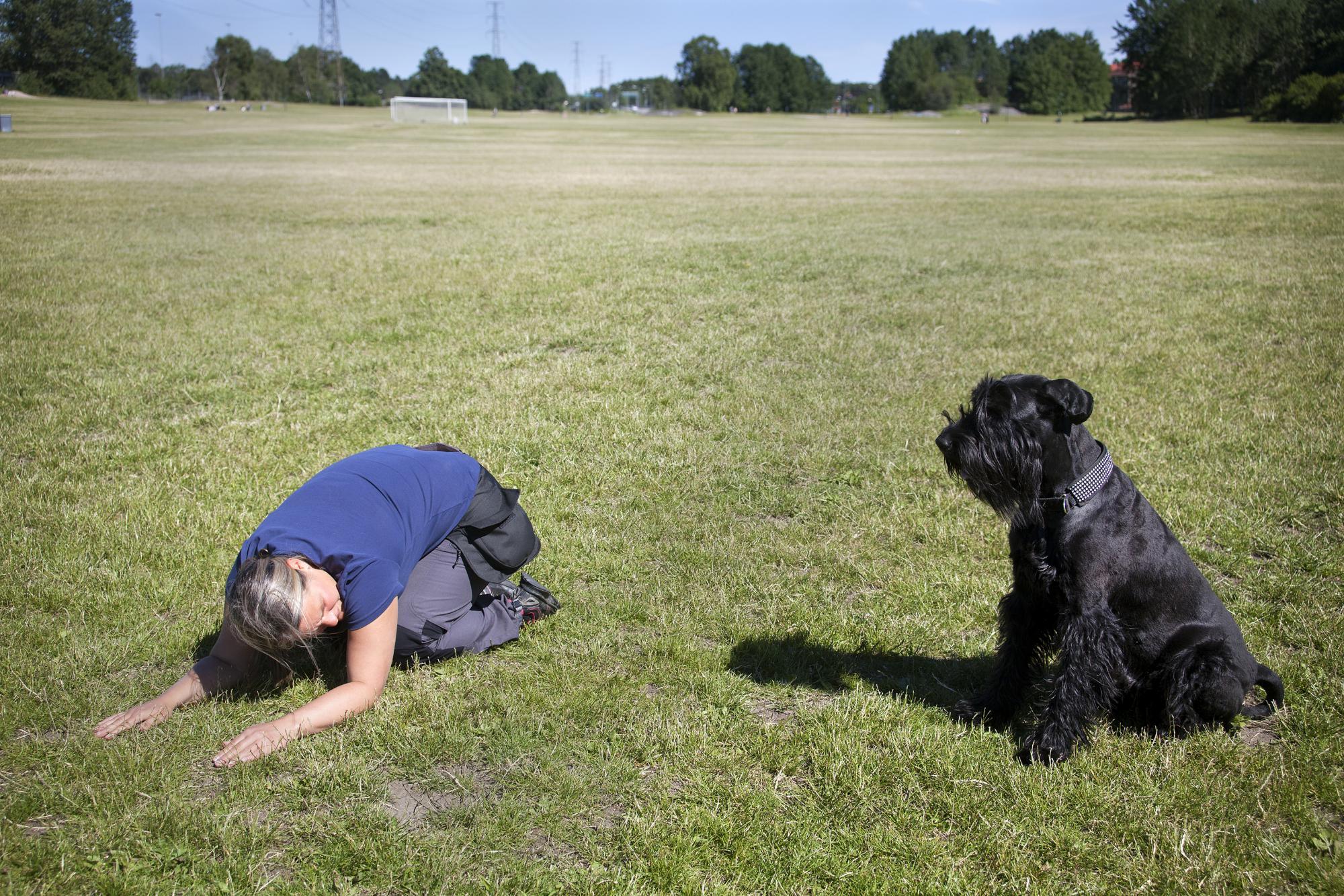 Hunden skall vid träningen klara av att hålla en startposition oavsett vad tränaren gör. Linda rekommenderar att du har hunden framför dig.