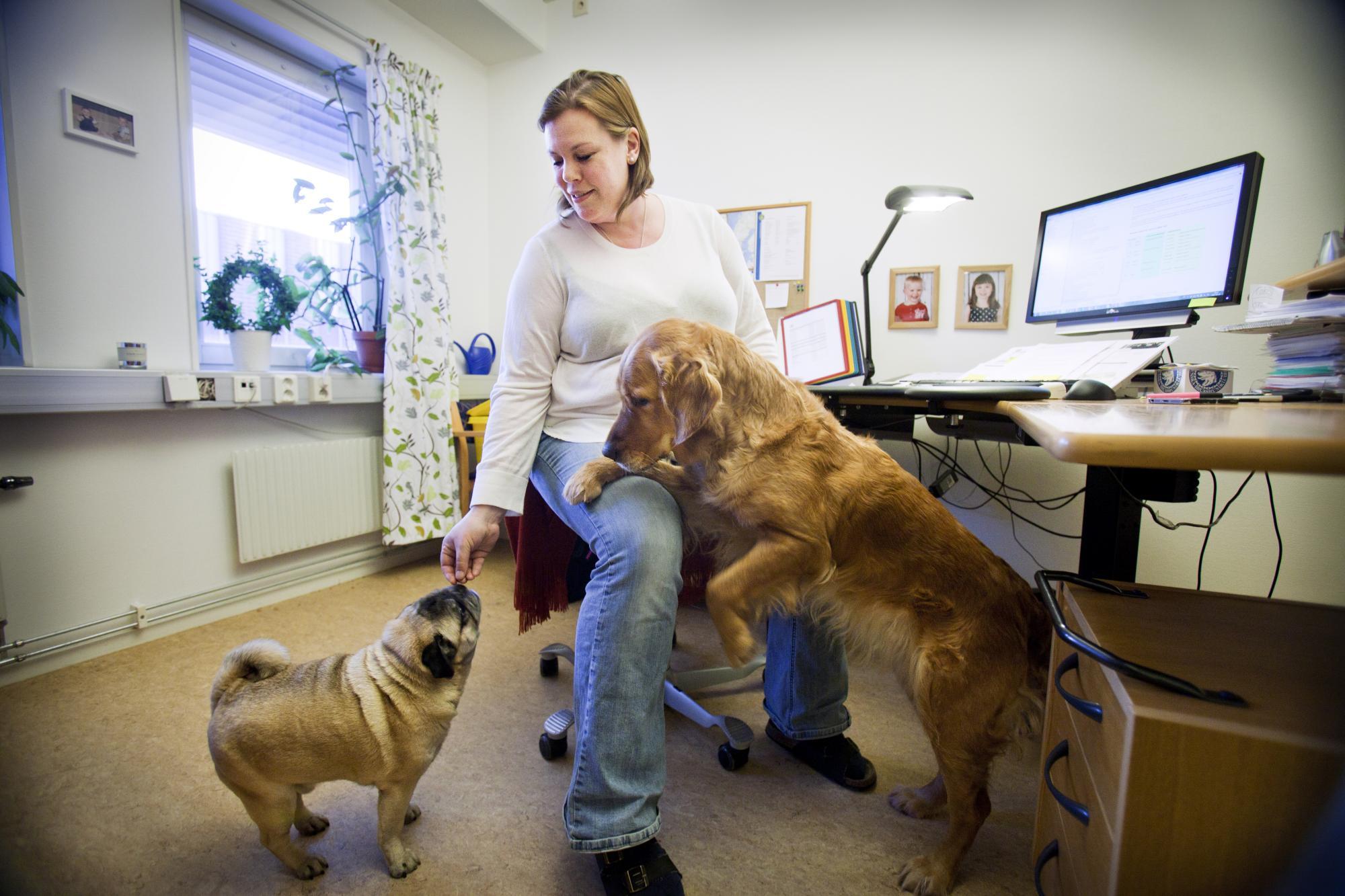 Katarina Swahn är organisationssekreterare på Svenska Brukshundklubben och har med sig MopshannenGollum, Jargong's Gambler Gollumoch Golden retrievertikenNixi, Oxunda's Nostalgic Nixiepå sitt rum.
