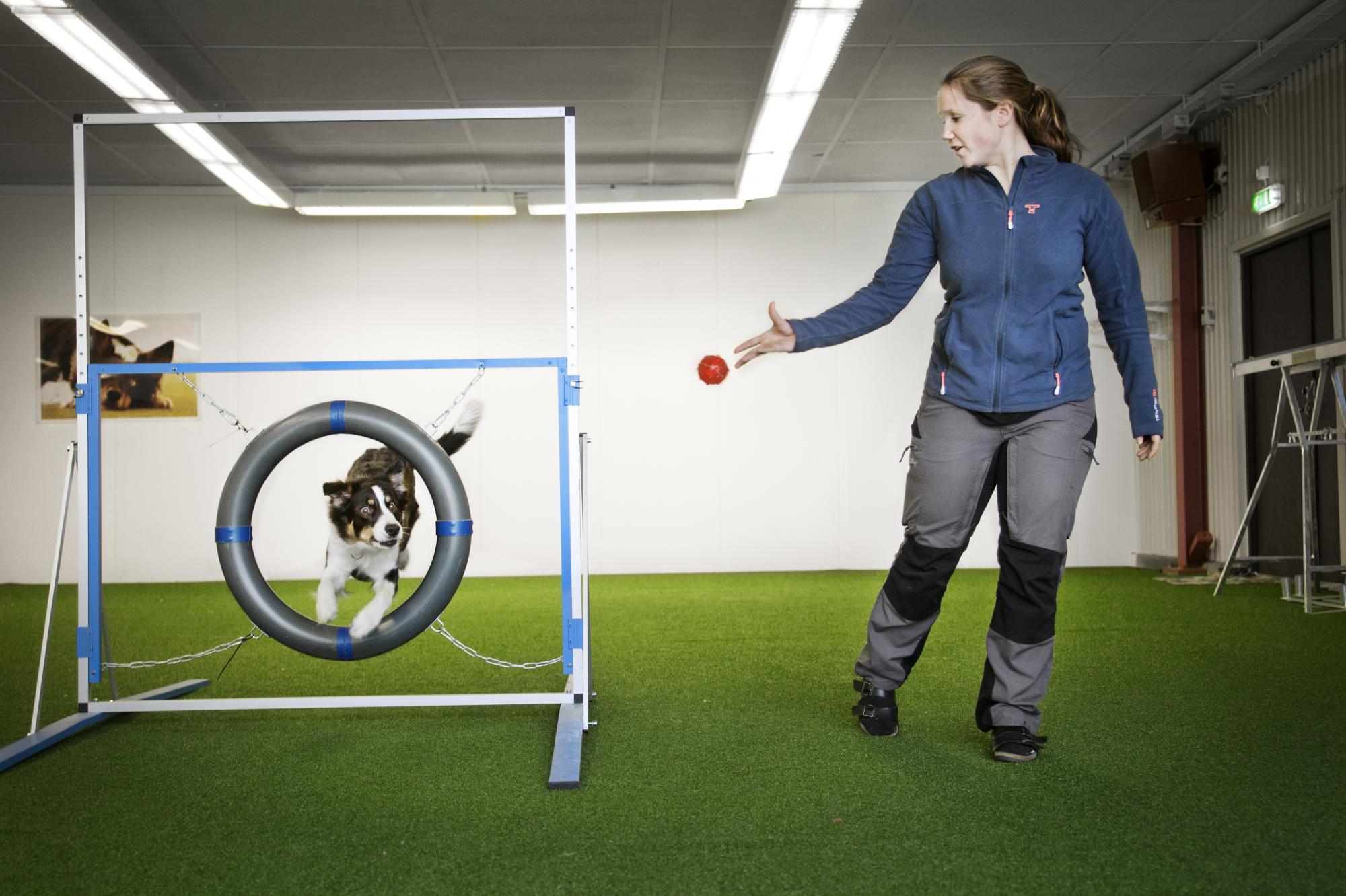Isabelle tränar lydnad, vallning, nose work och som häragility med sina hundar.