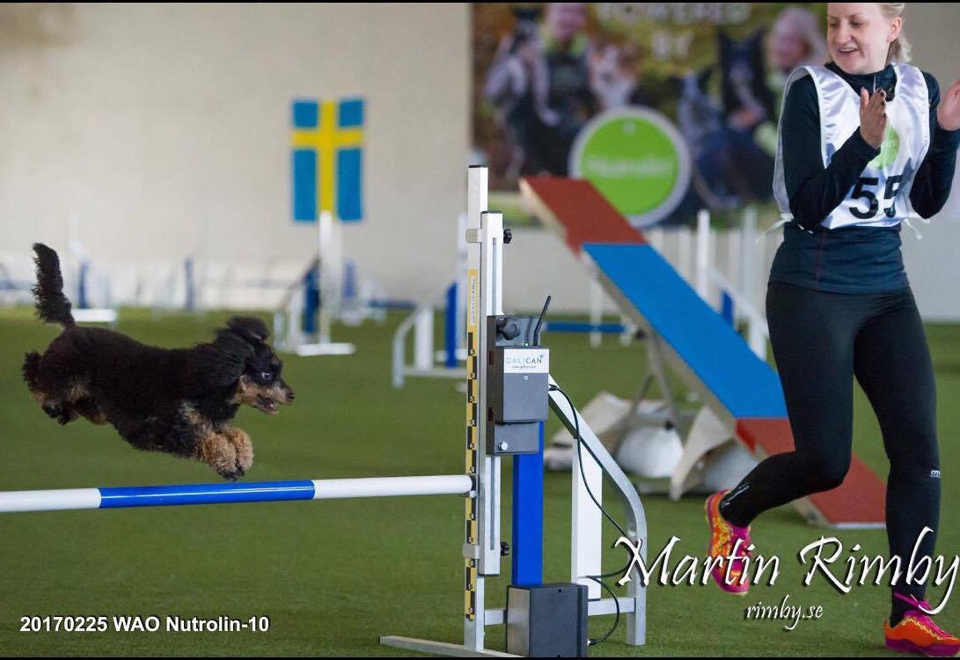 Pernilla Gervald är med och arrangerar helgens Gåsahopp. Hon kommer även tävla med sin Pudel Eija, \