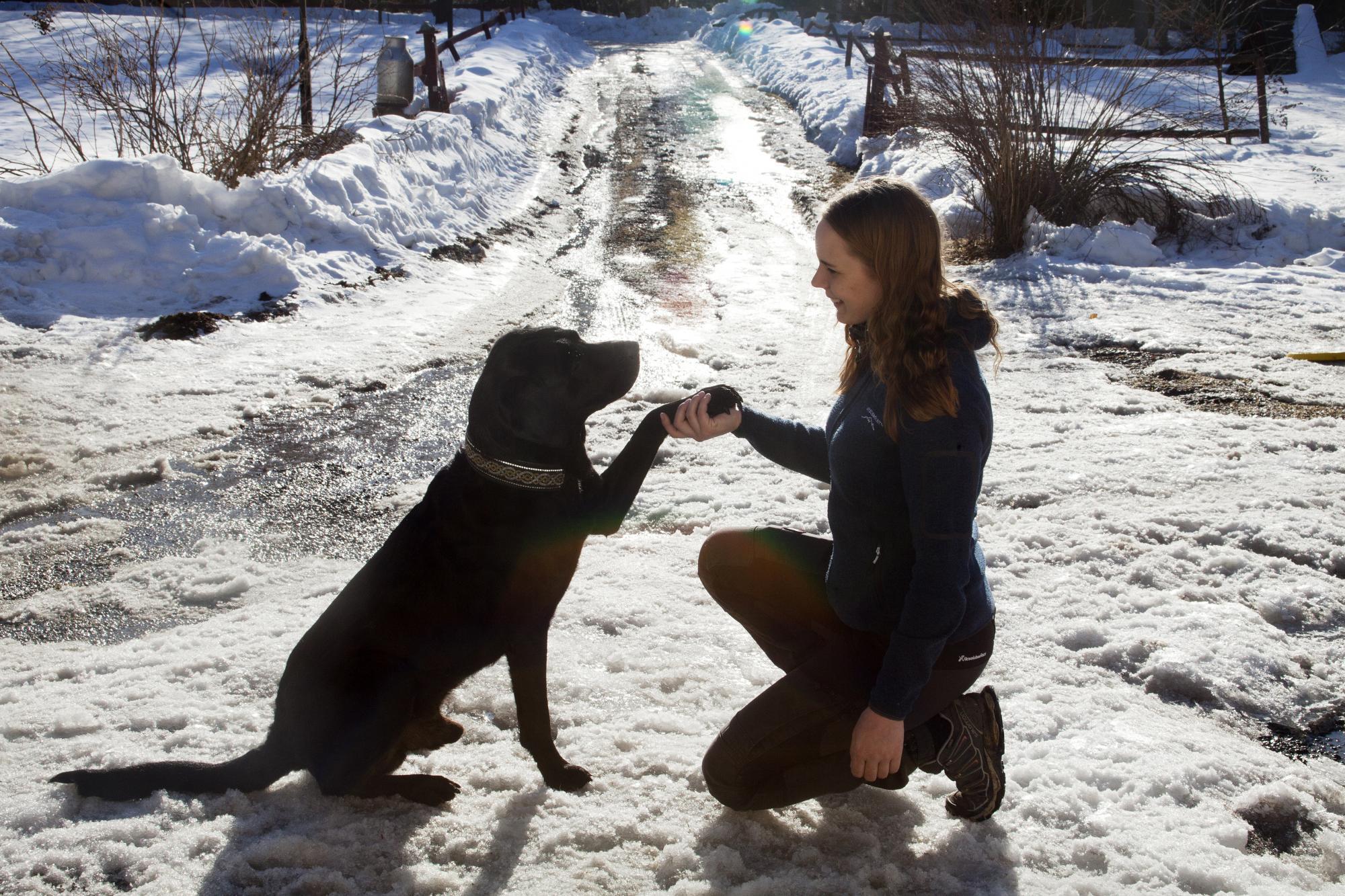 Lilly Röök Sahlin studerar hund på Kvinnersta naturbruksgymnasium i Örebro och Tano är ofta med på lektionerna.