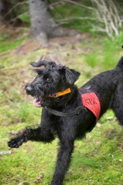 Den som har kursverksamhet kan söka tillstånd att ha lös hund i skog & mark även mellan 1 mars och 20 augusti.