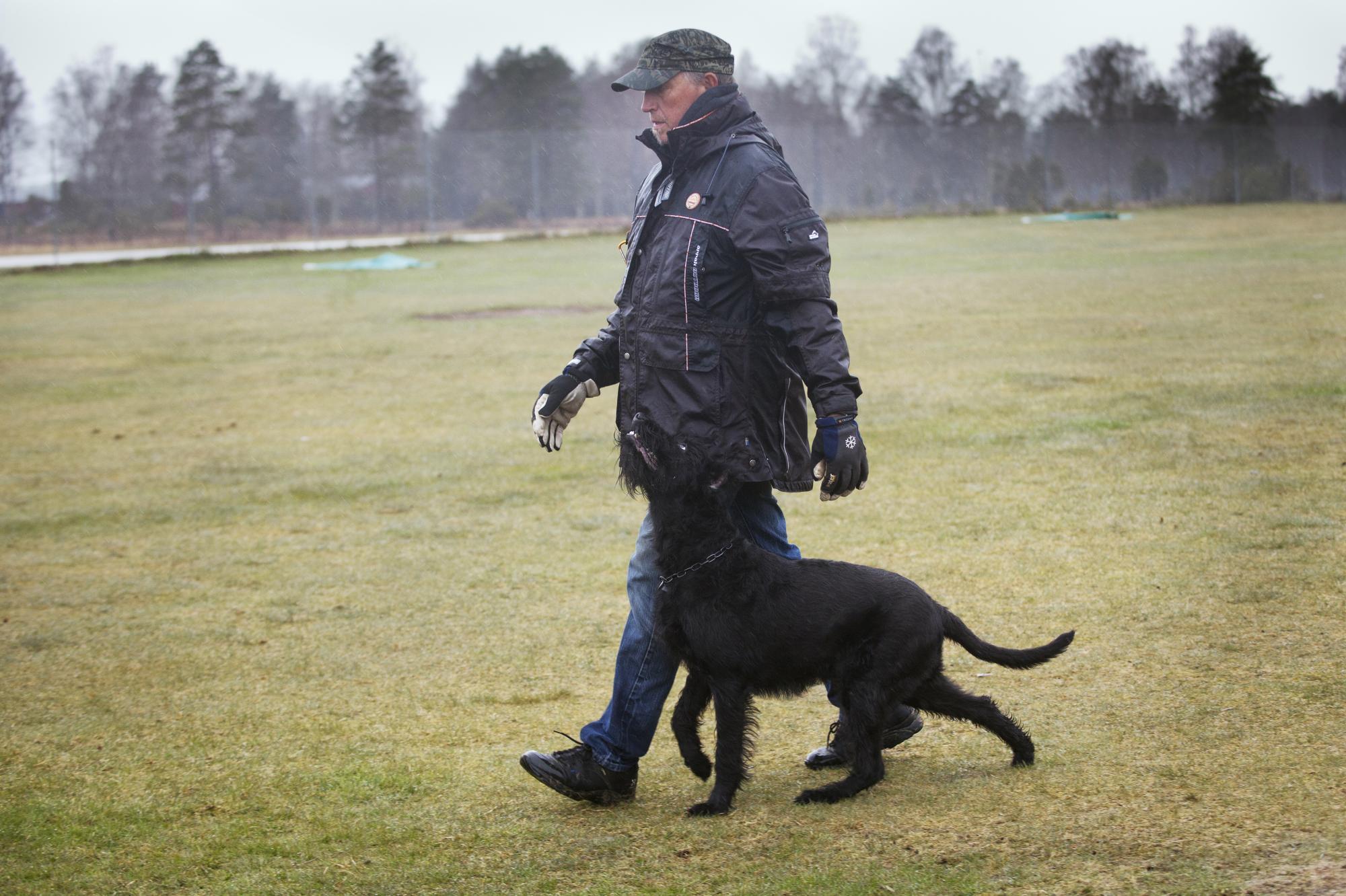 Terje Jacobsen tränar med Casa, Carolinchen casa de Cilla. Han kommer tävla IPO på SM för Riesenschnauzerhundar, men med annan hund.