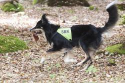 Ungdomsmästaren Erica Häggströms hund Check, \