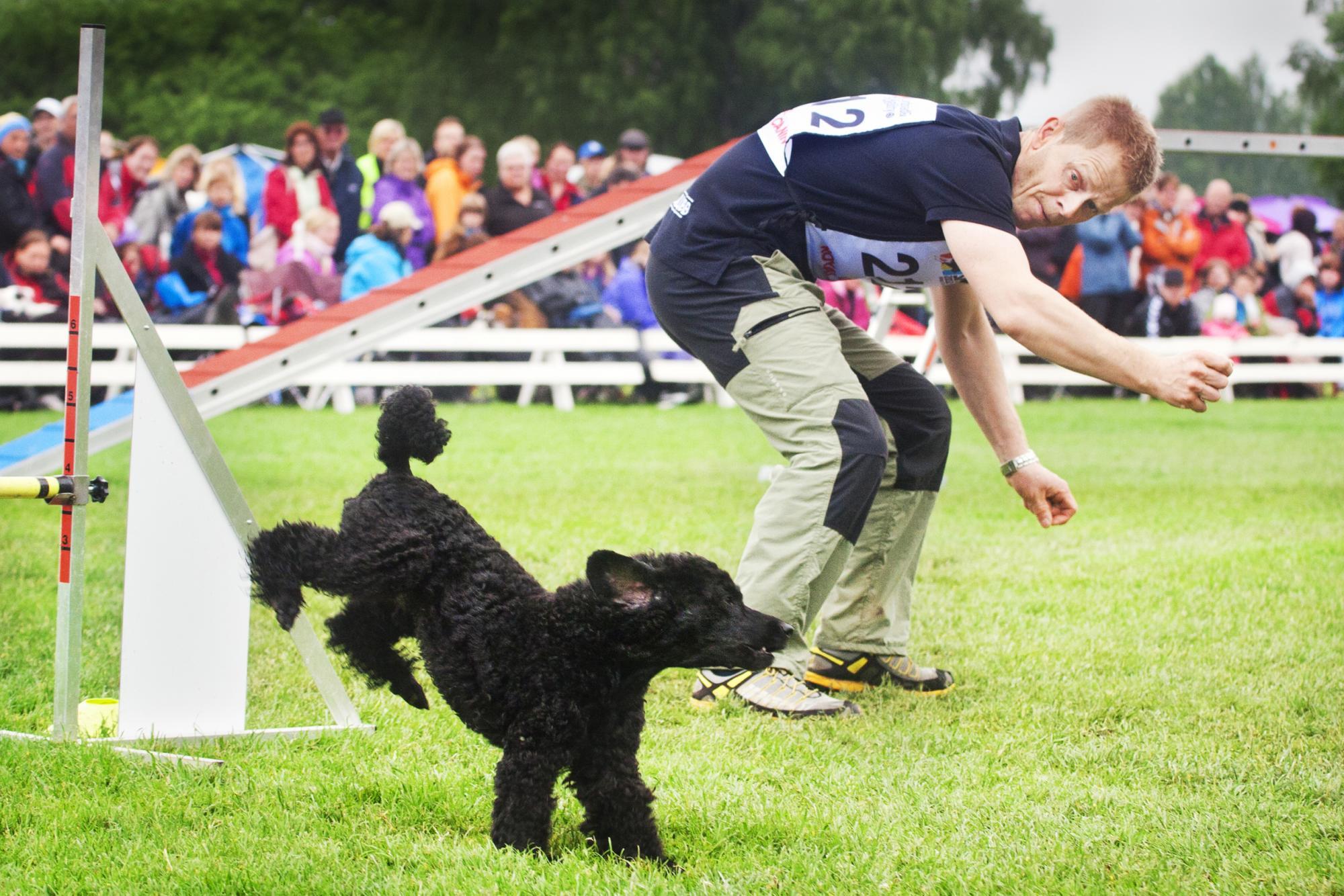 Thomas Malteryd med hunden Aston,Charmer Wins zippy zack,från SM i agility 2012. Thomas kommer dock inte vara med på årets Gåsahopp.