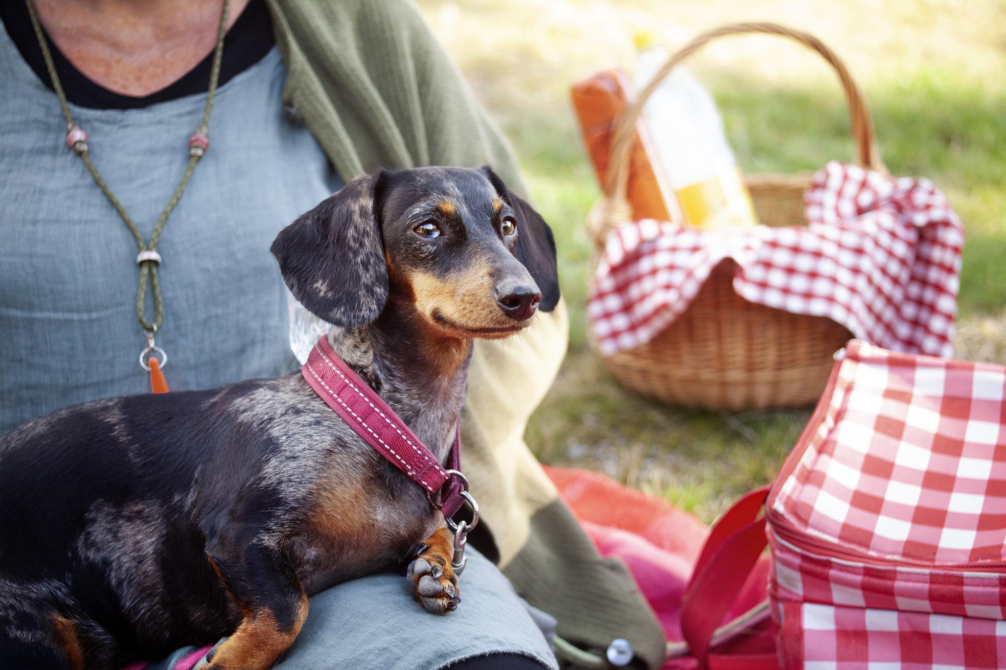 Taxen Mira får både passivitet- och miljöträning när matte Cilla tar en picknick med henne.