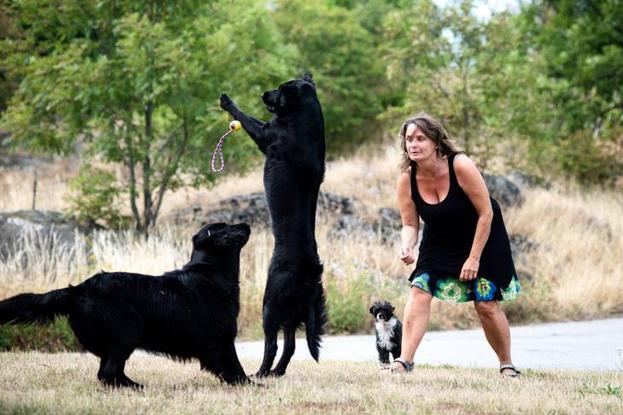 <span>Cilla Danielsson är hundinstruktör, -psykolog, coach samt grundare & ägare av Hundens Hus.</span>