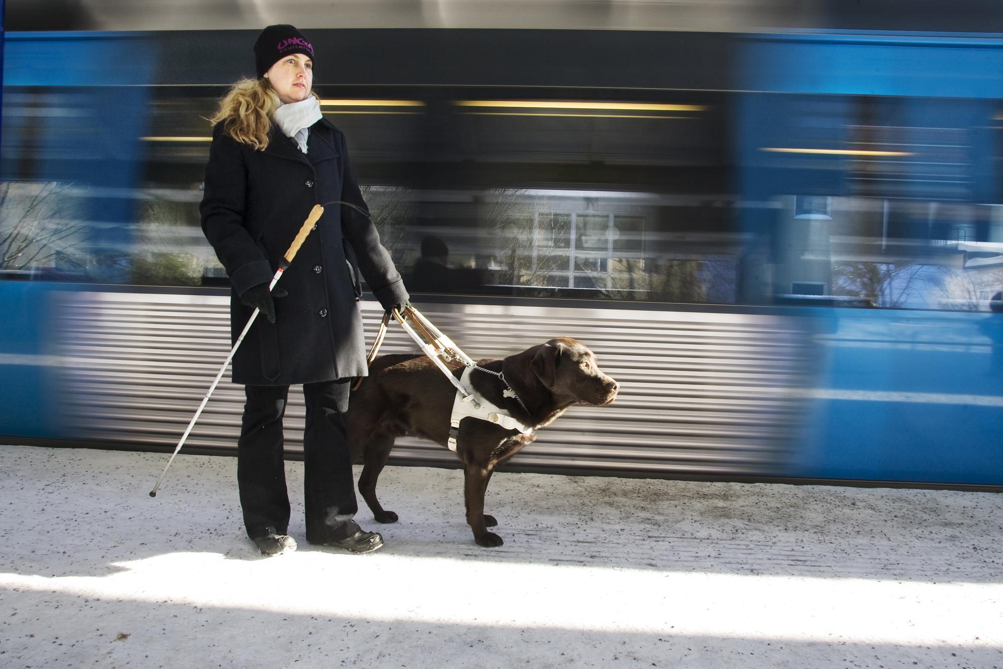 Hundar gör stor nytta som ledarhundar för synskadade och har även en egen dag som firas. Läs mer om dagen:<br />Klicka på bilden för att komma till artikeln.