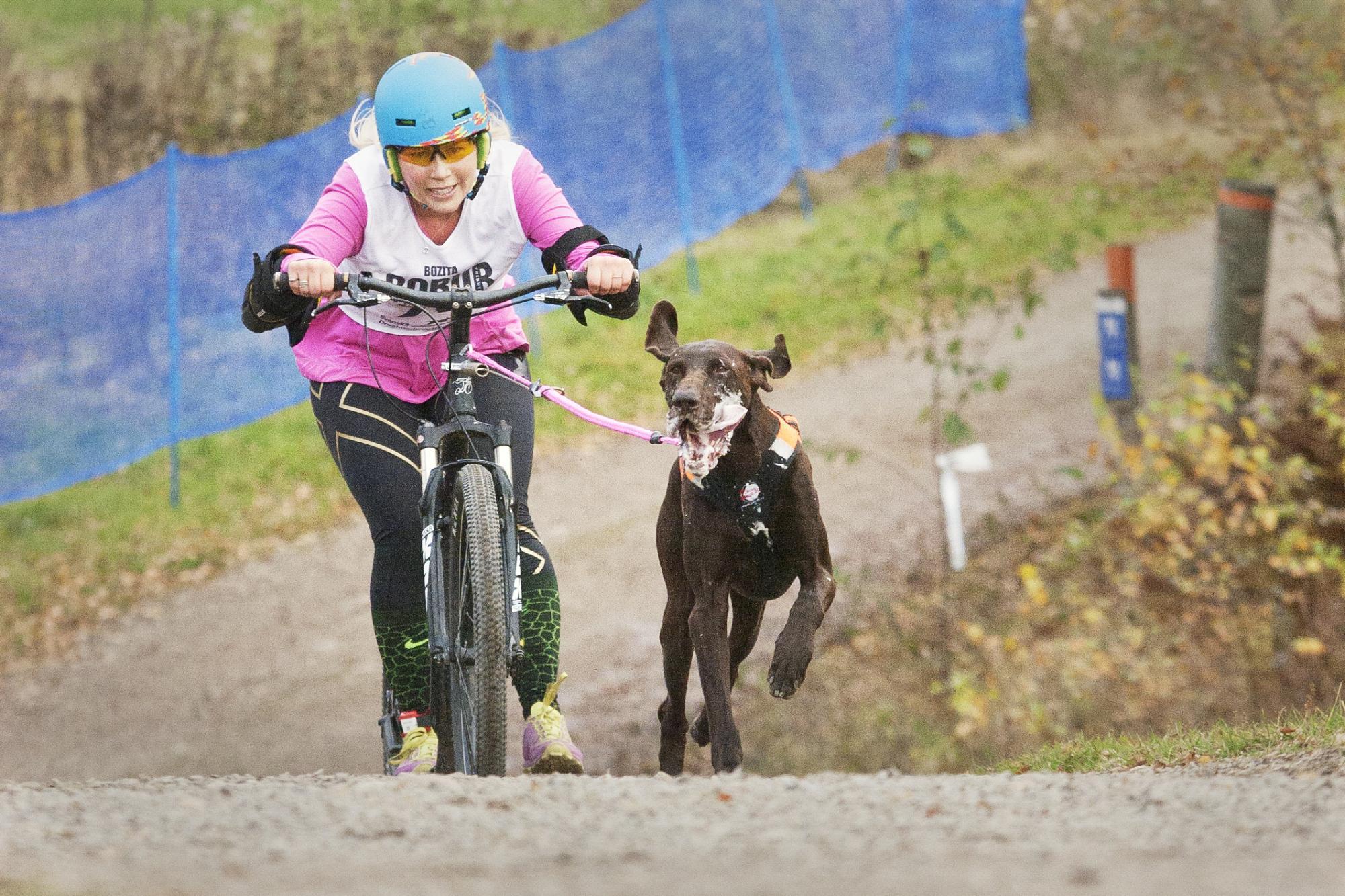 <span>Rosanna Lovmark tävlade i scooterklassen med sin A-hund på SM i barmark. HE gjorde självklart ett reportage från tävlingarna där 118 medaljer delades ut i många olika klasser.</span>