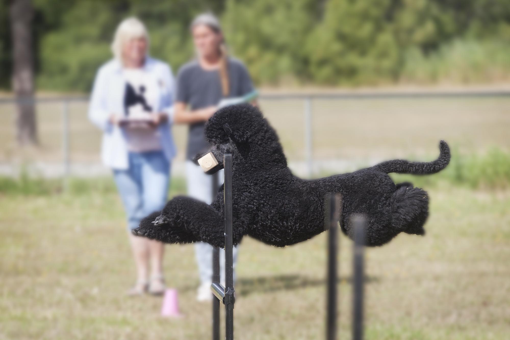 Barbro Pålsson tävlade i högsta lydnadsklassen med sin hund Linus, \