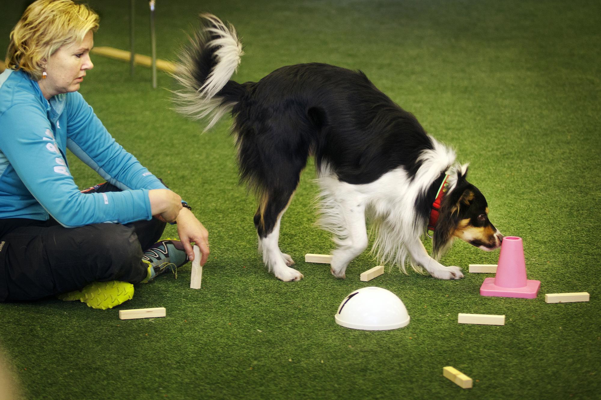 Kjellaug övertränar sin hund Ludvig med Synnöve som störning. För att göra det extra svårt ligger den rätta vittringsapporten under konen.