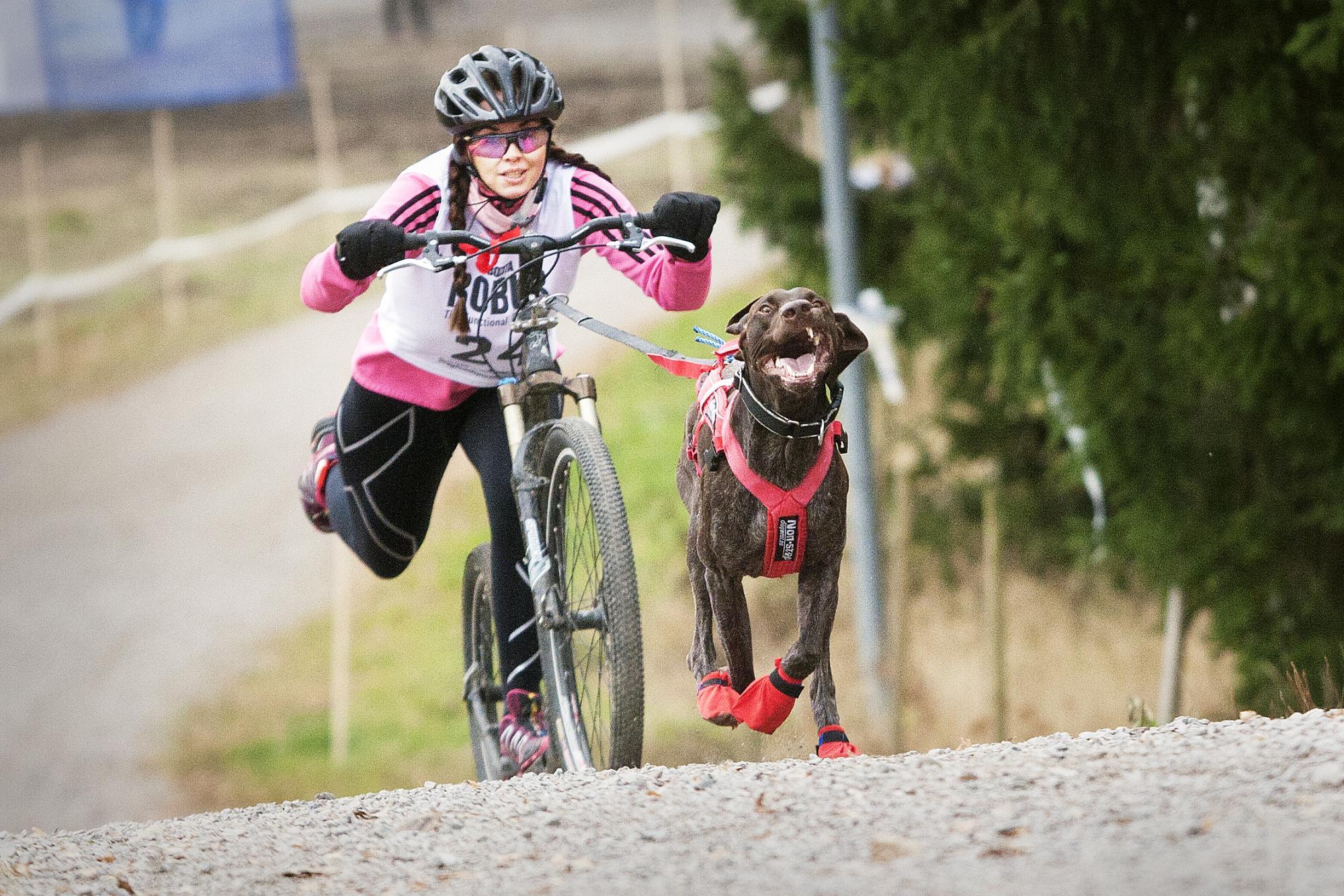 Linda Johansson som tävlade för Värmdö Brukshundklubb körde sin hund Plexus, \