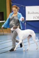 Proffsiga Carina Renberg i ringen med sin Greyhound Svea, \