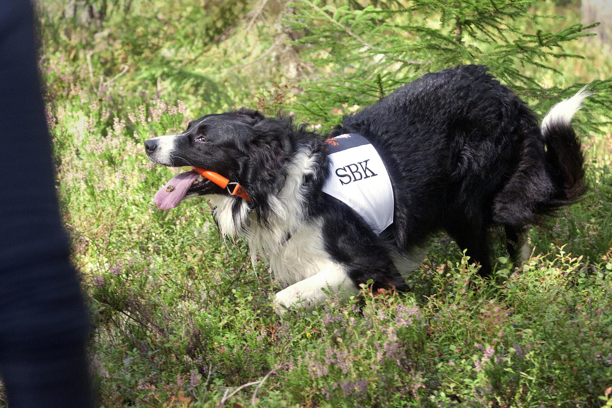 <span>Susanne Rydberg hund \