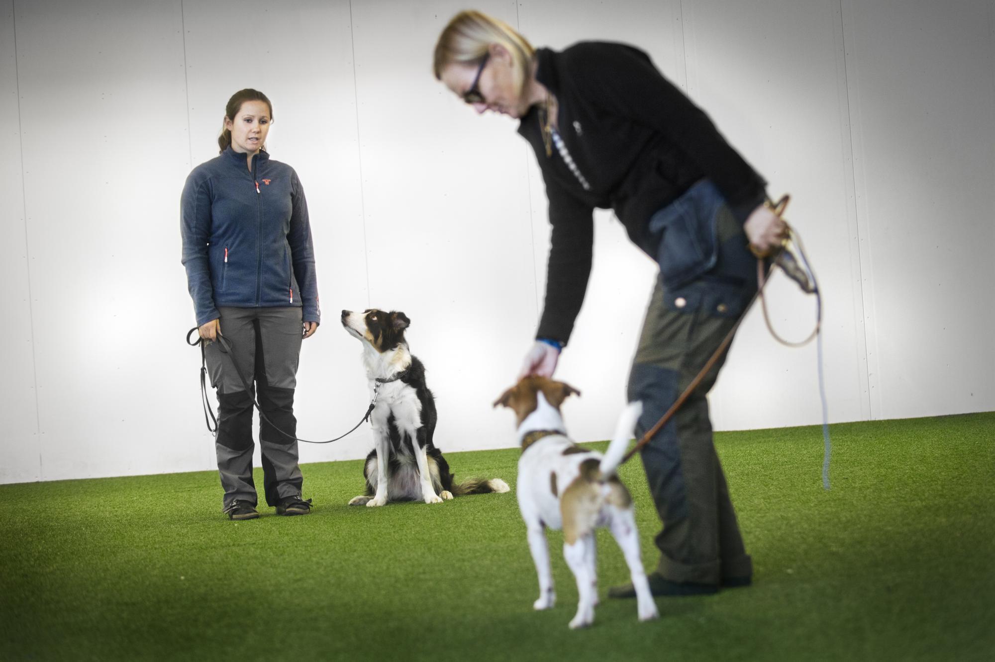 <span>Isabelle Ölund har privatlektion med dansk svenska gårdshundenHugin och matte Anette. Isabelle hyrs även in av Svenska Brukshundklubben för att förbättra deras instruktörer.</span>