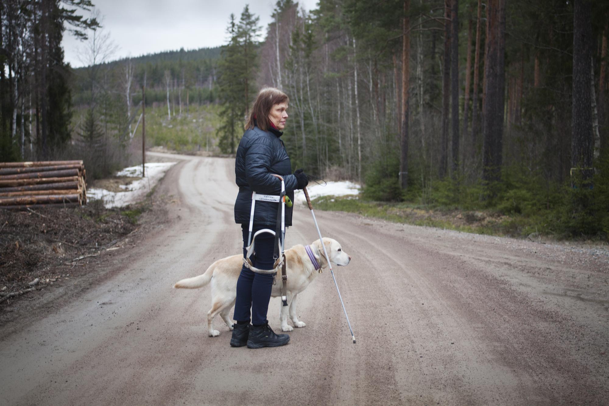 Regeringen vill flytta ledarhundsverksamheten från Synskadades riksförbund till myndigheten för delaktighet. På bilden signalerar ledarhunden Spike att det finns en väg till höger.