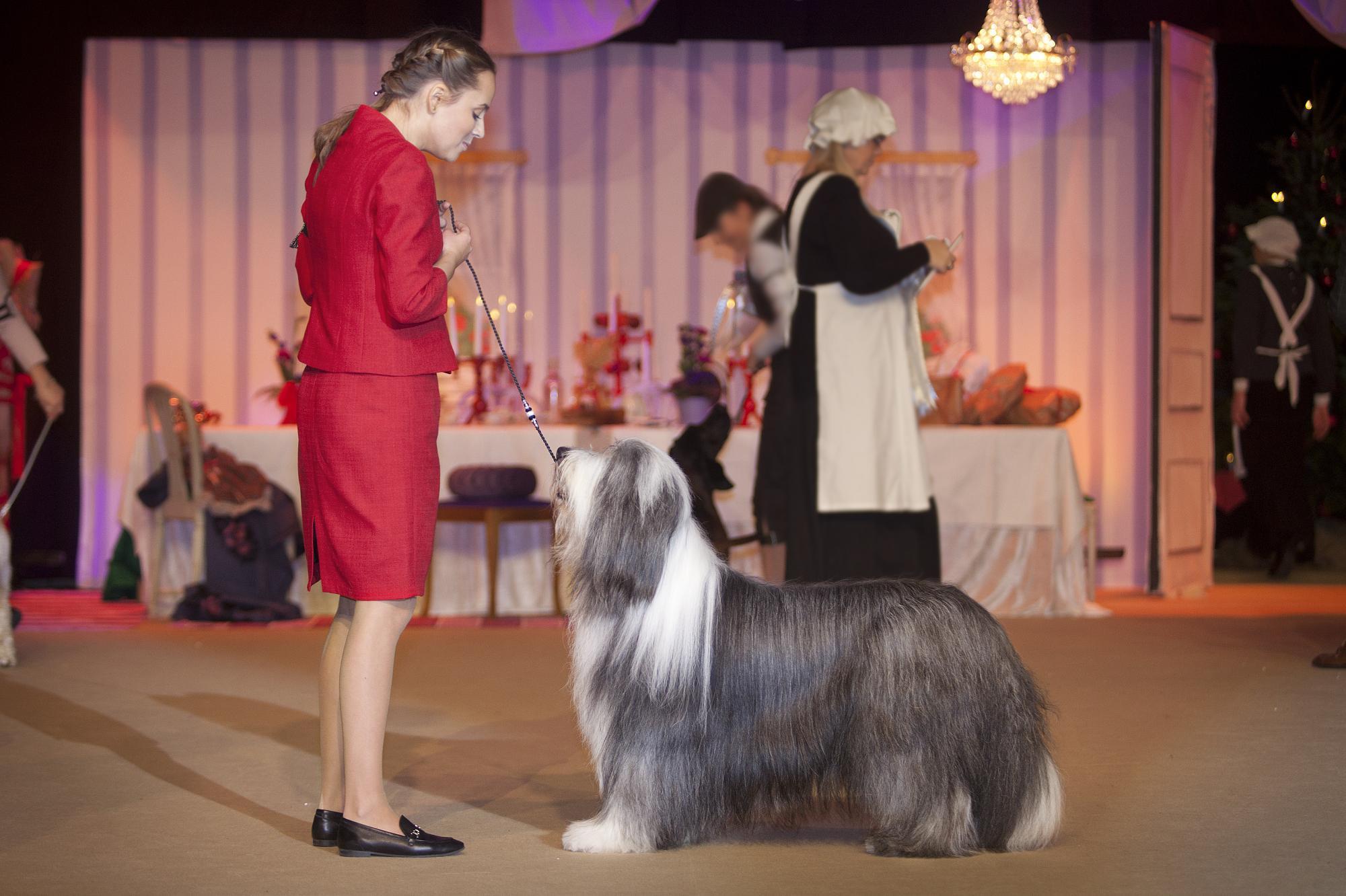 Selma tipsar den som skall ställa ut sin hund att träna den på att stå stilla. Det är något hon prioriterar att lära hunden mer än att sitta.