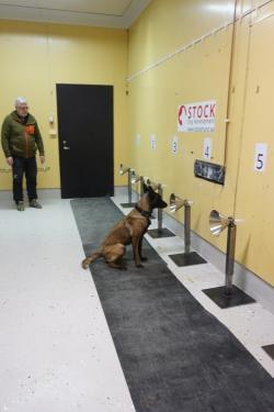 Michael Hedman har påbörjat träningen så att hundarna har lärt sig den specialbyggda urvalsbanan.
