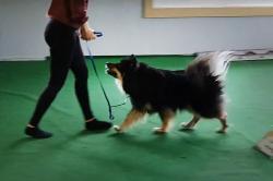 Frida Flodin & hennes Finska Lapphund Riki, \