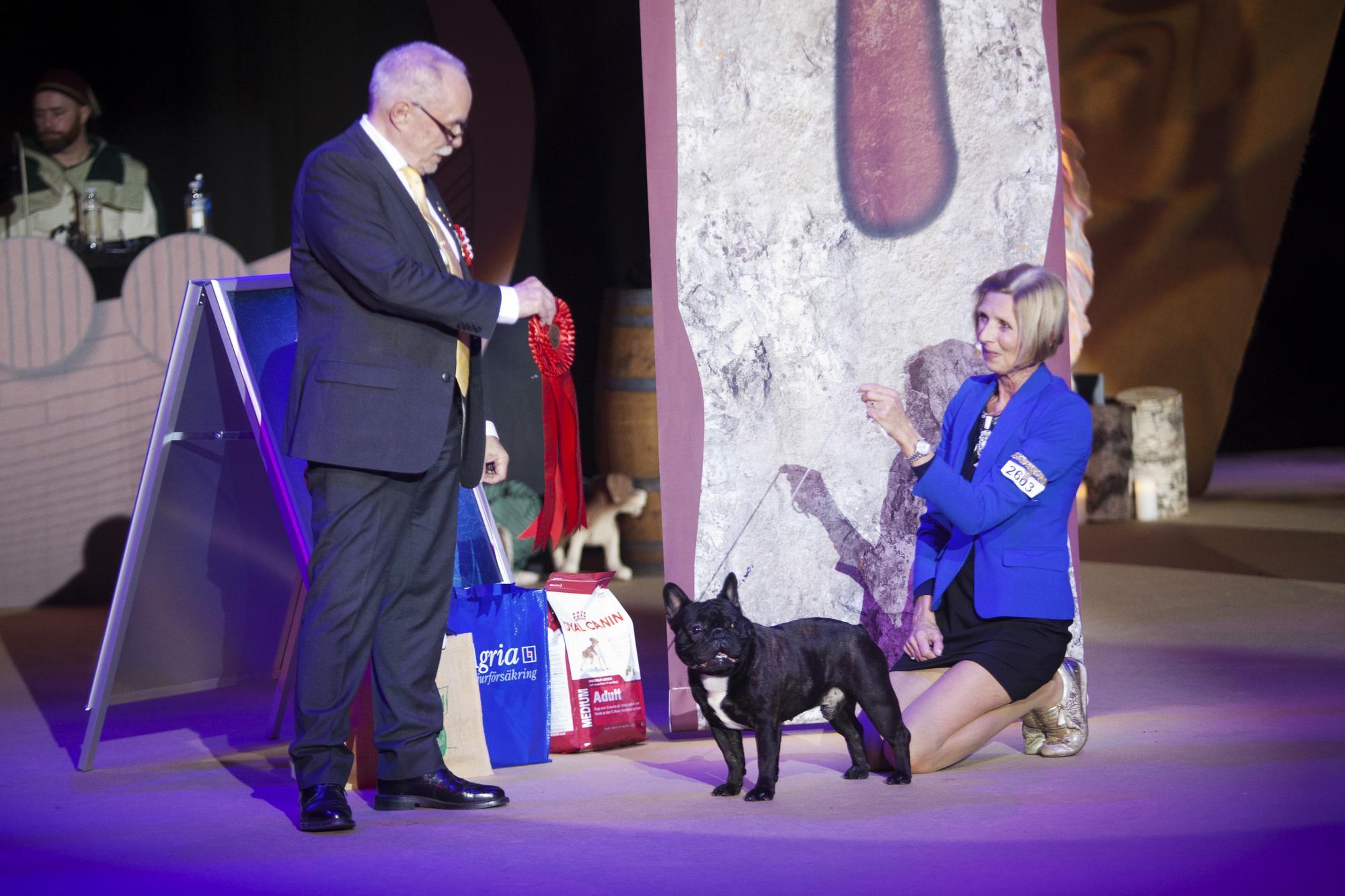 Bulldogshannen Zecudas Xfactor vann gruppen för sällskapshundar.