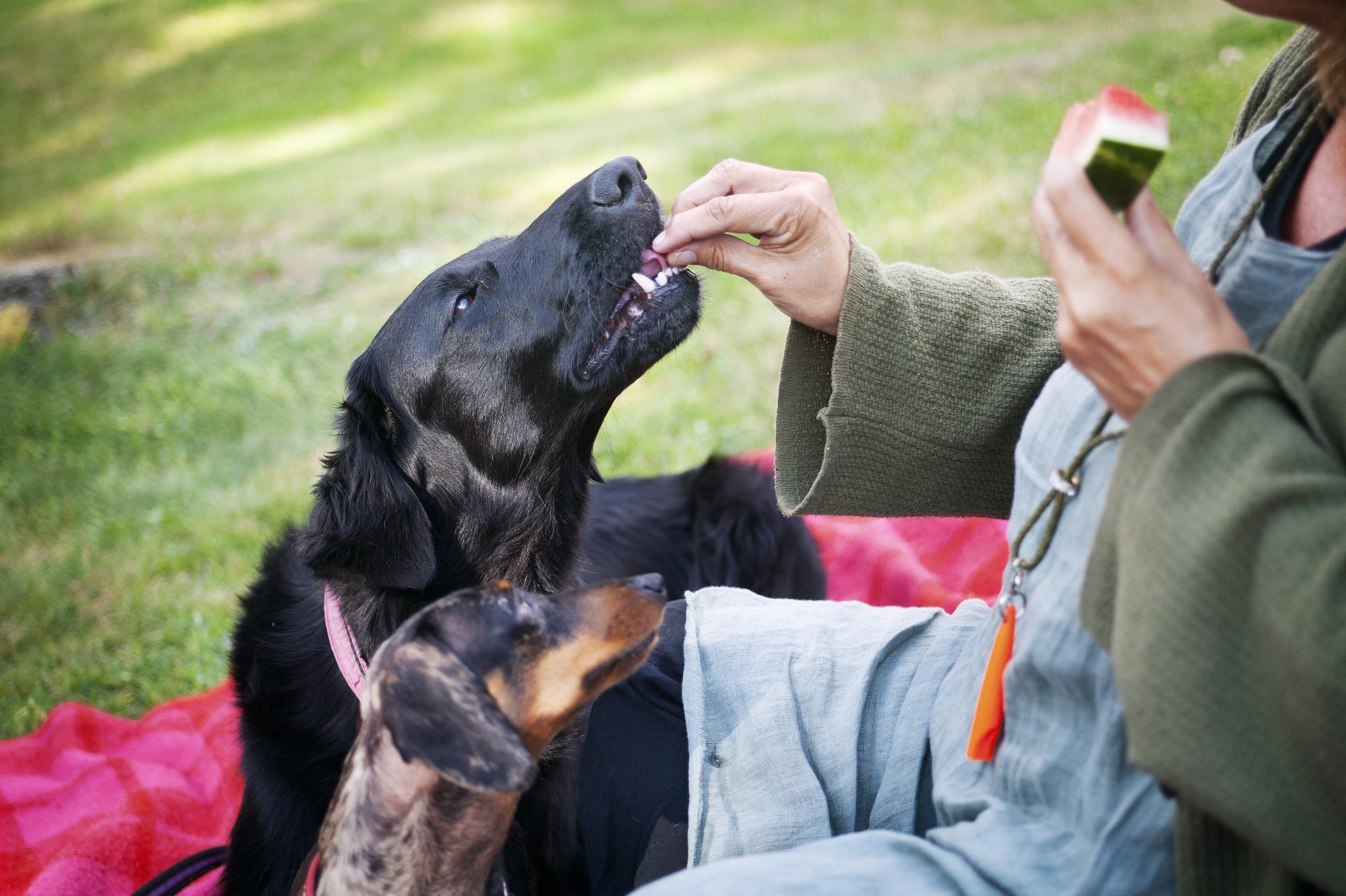 <span>Cilla bjuder Nova som gärna smakar den läskande melonen.</span>
