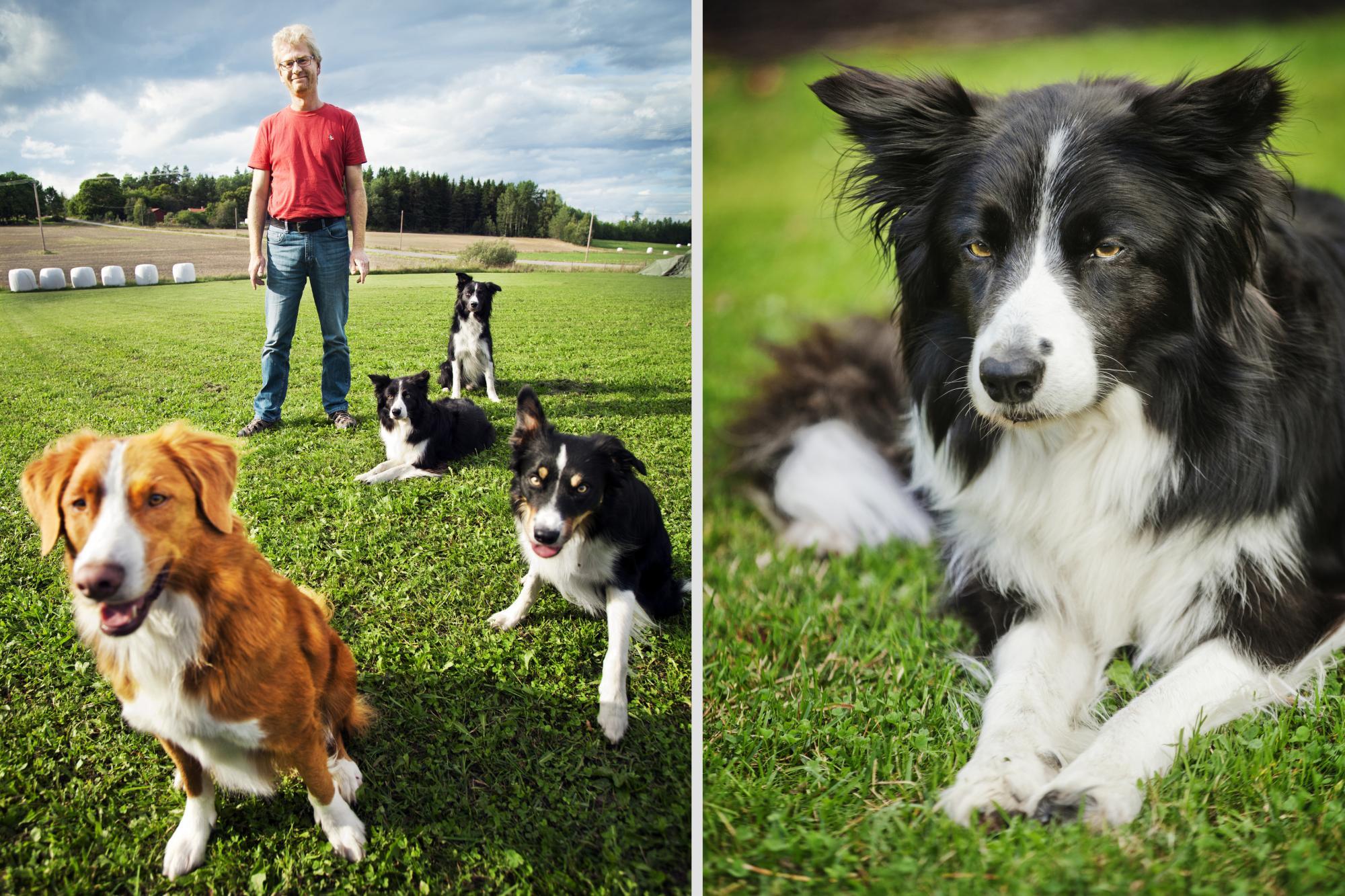 Kenth Svartberg tillsammans med sina hundar. Till höger Kes som gärna håller sig lite på sin kant.