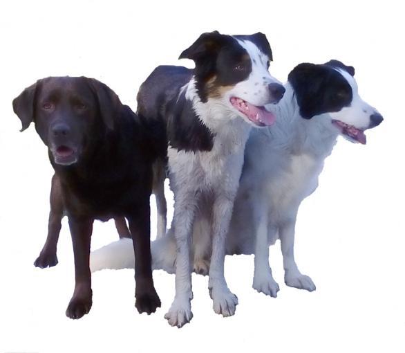 Mina tre pälsklingar Rosie, Dolly och Driva
