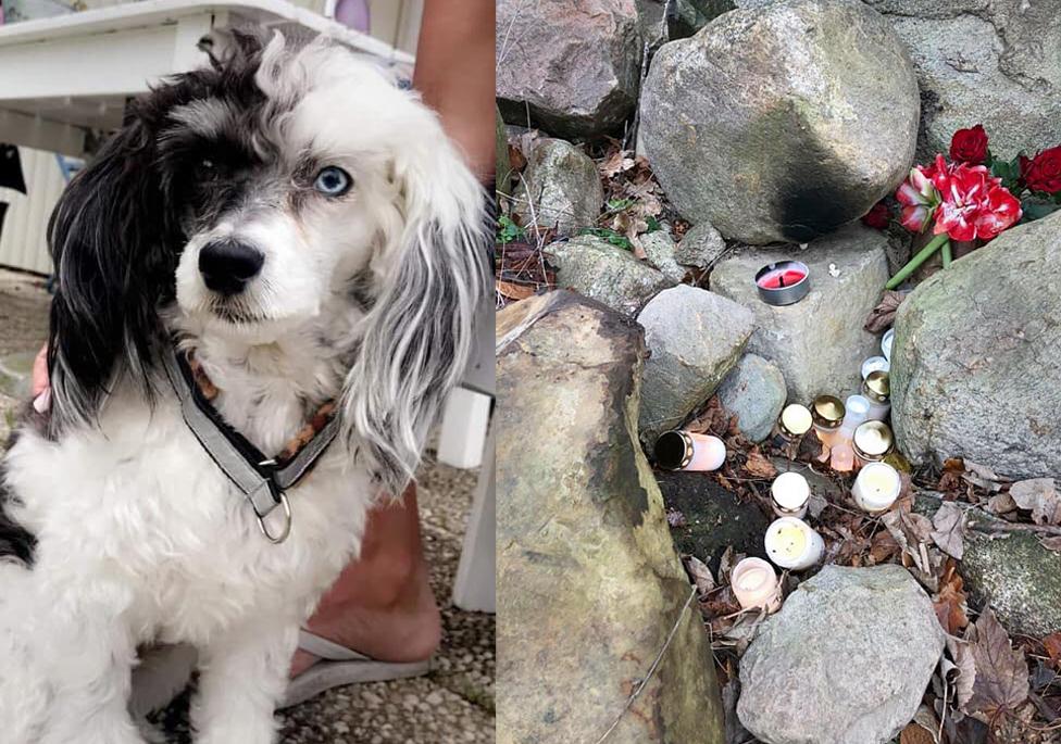 Tycho skrämdes på nyårsnatten, flydde i panik och hittades död i ett stenrös tre dygn senare.