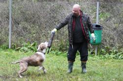 <span>Anders Bagges hjärta brinner för hundar och han är själv på väg att skaffa sig en till hund.</span>