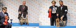 <span>Anne ToveStrande var gruppdomare av terriers underNordic Dog show.</span>