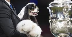 <span>Jason Lynn från Preston med Miami, Amerikansk Cocker Spaniel, vinnare av best in show på Crufts 2017.</span>