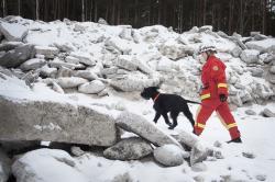 Den som vill ingå i den nationella räddningsstyrkan kan nu utbilda sin hund tillräddningshund, men får vara beredd på mycket träning & hårda prov.